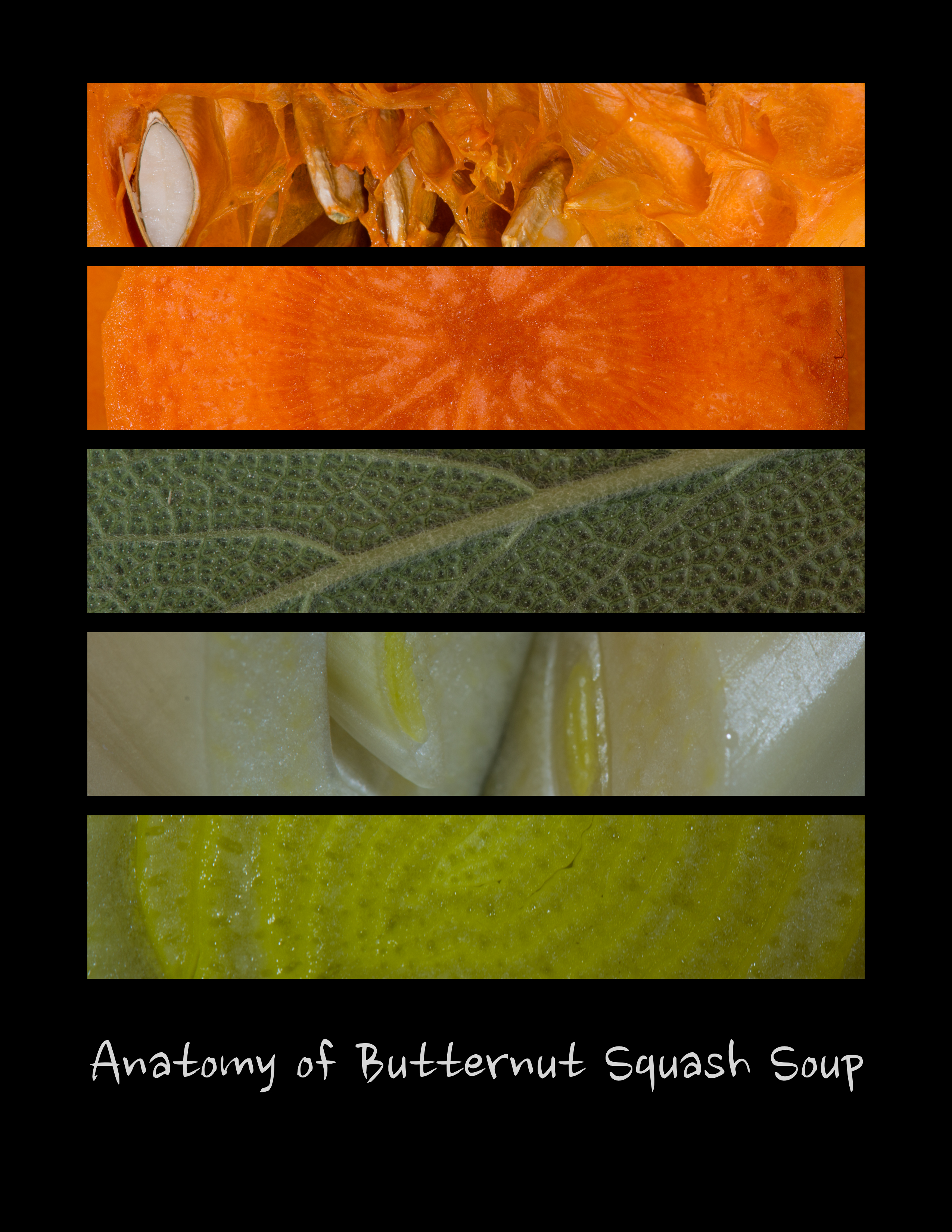 Anatomy of Butternut Squash Soup