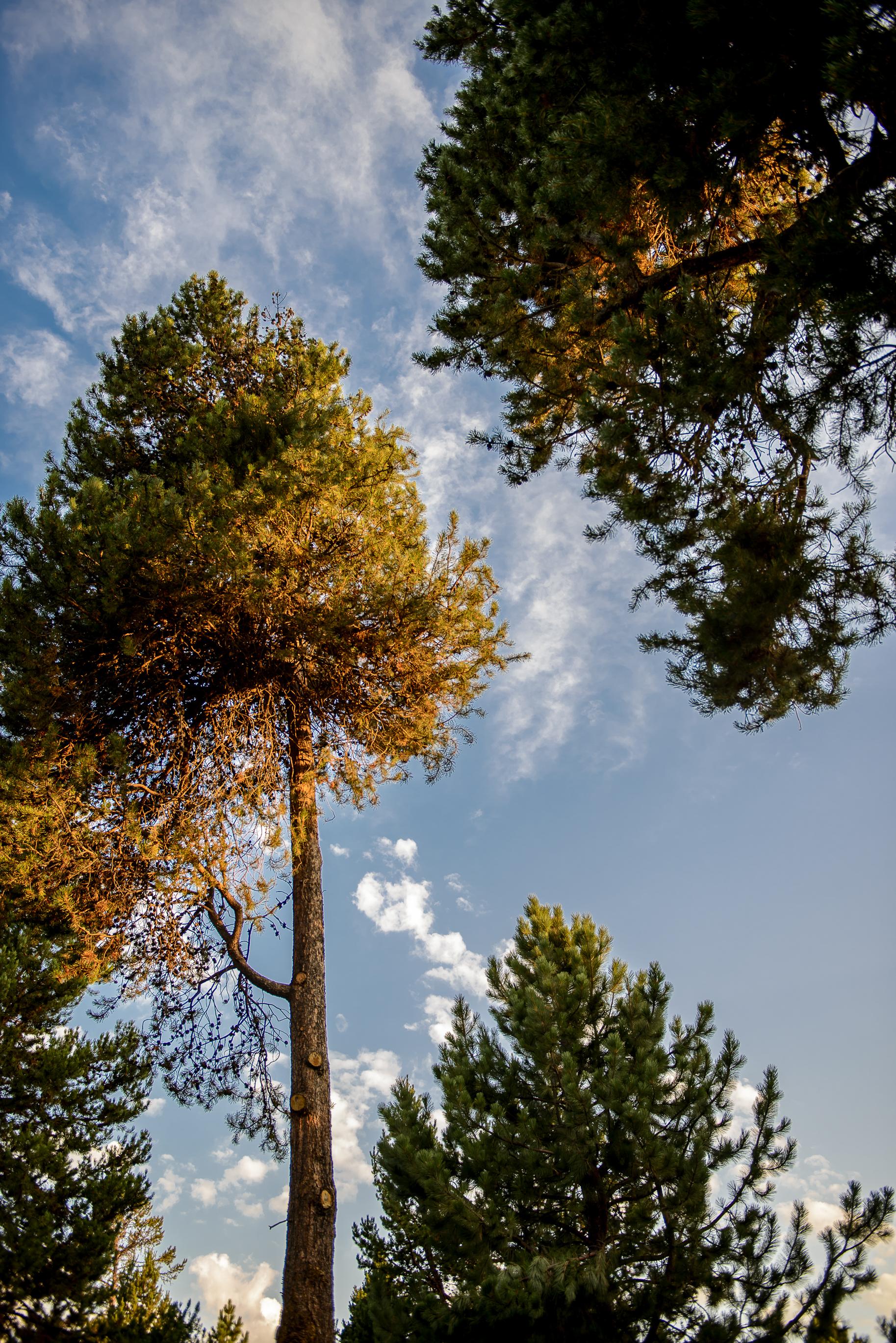 La Pine Day 2 -10-2