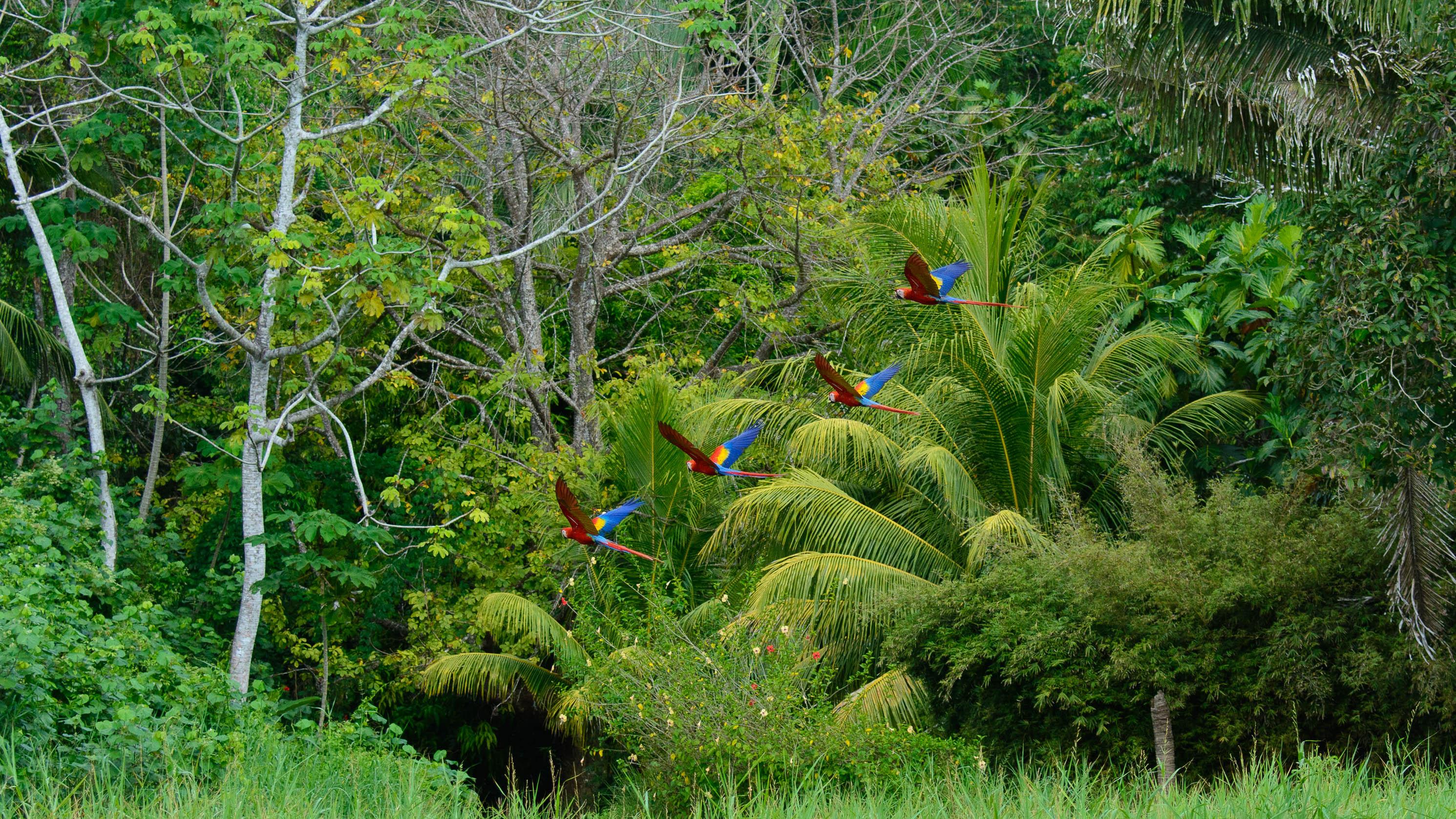 Costa Rica Day 4-696