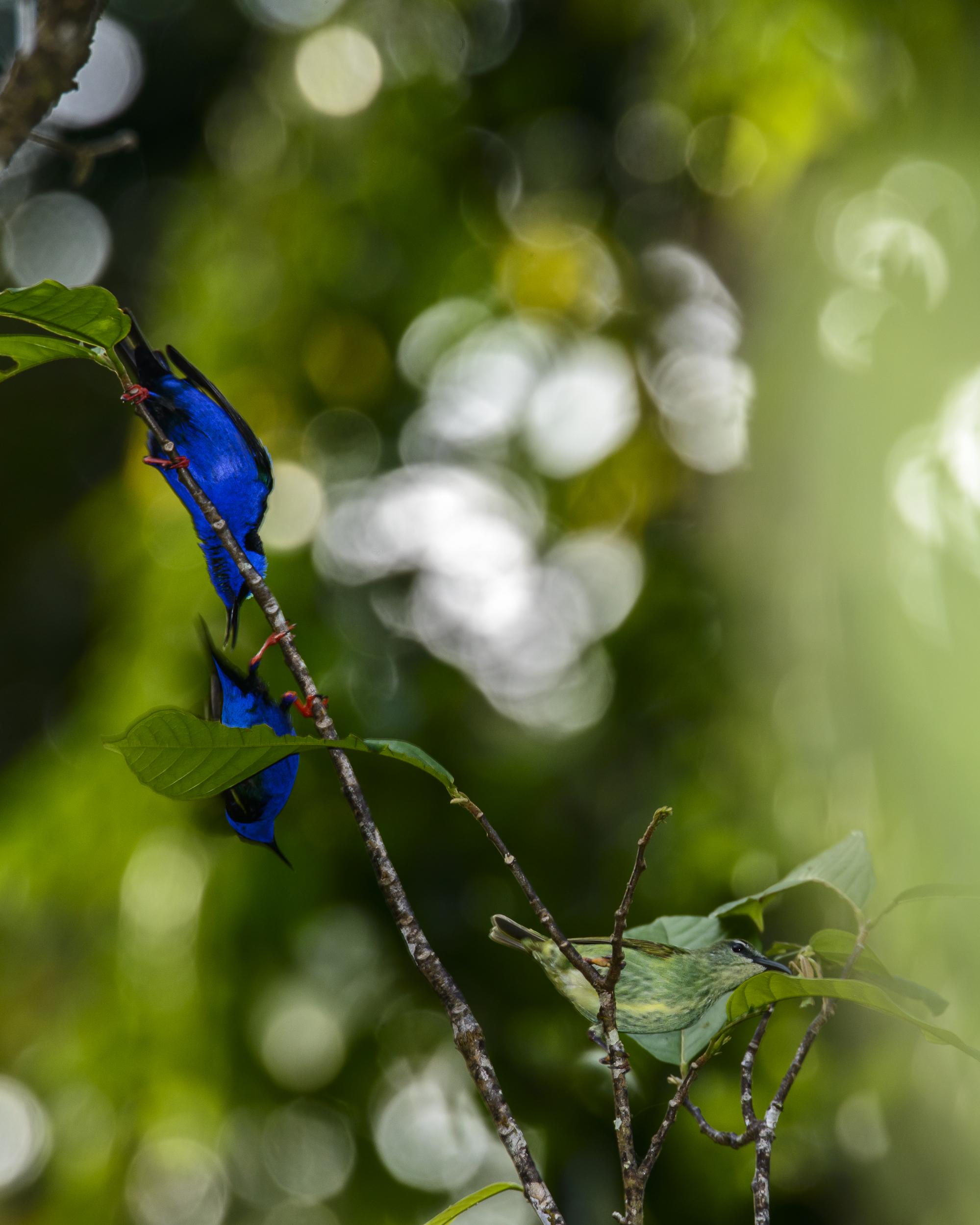 Costa Rica 2015-019-257