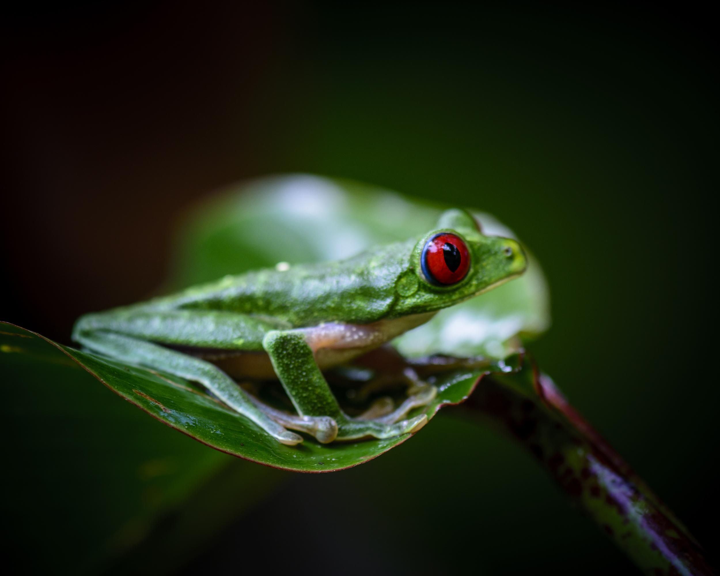 Costa Rica 2015-022-1109