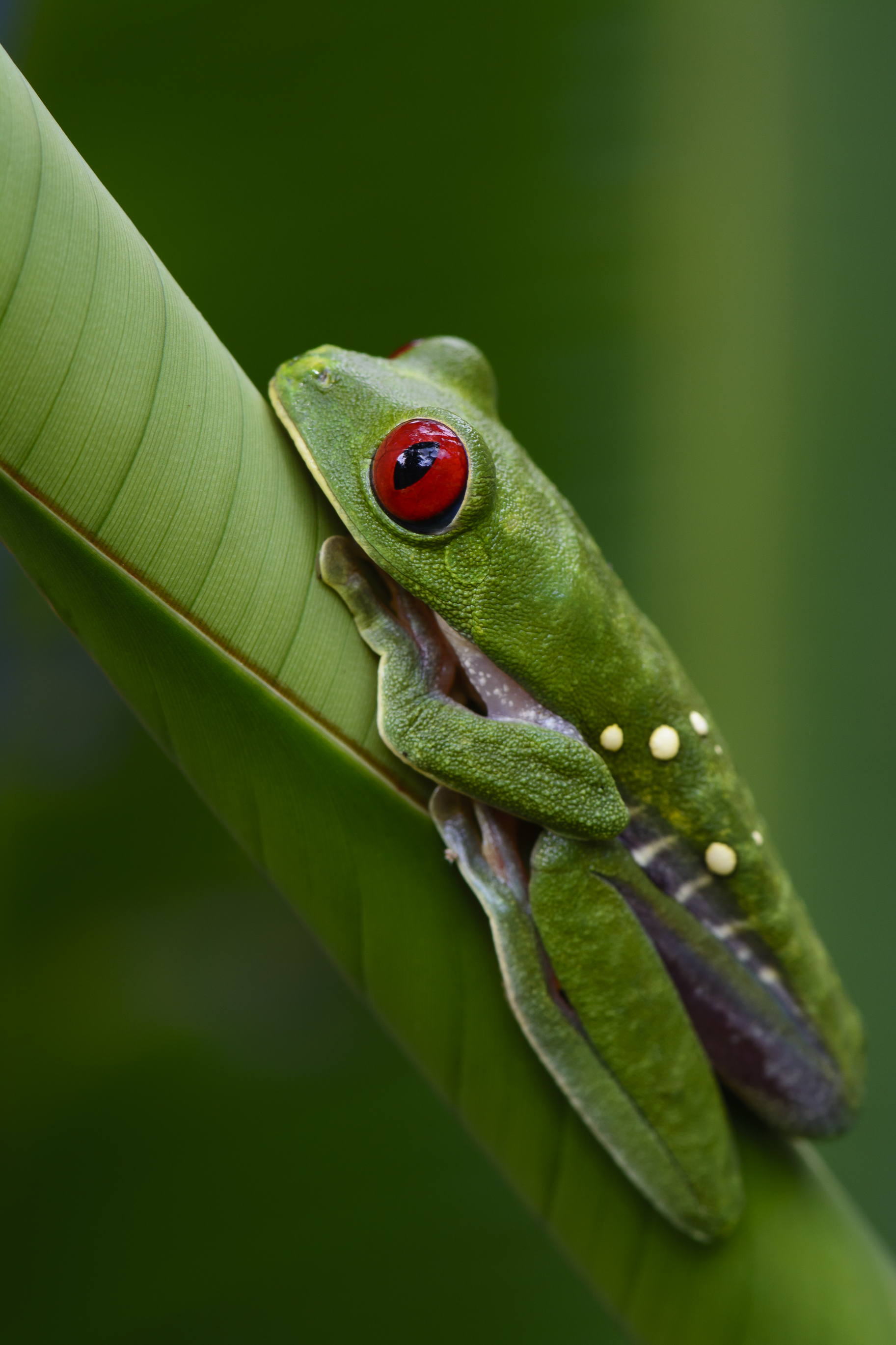 Costa Rica 2015-022-1194