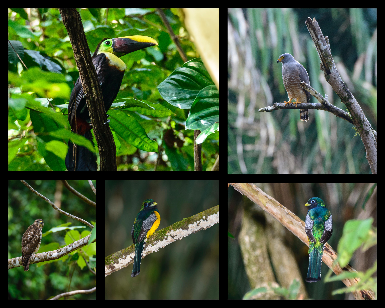 More Beaks 2