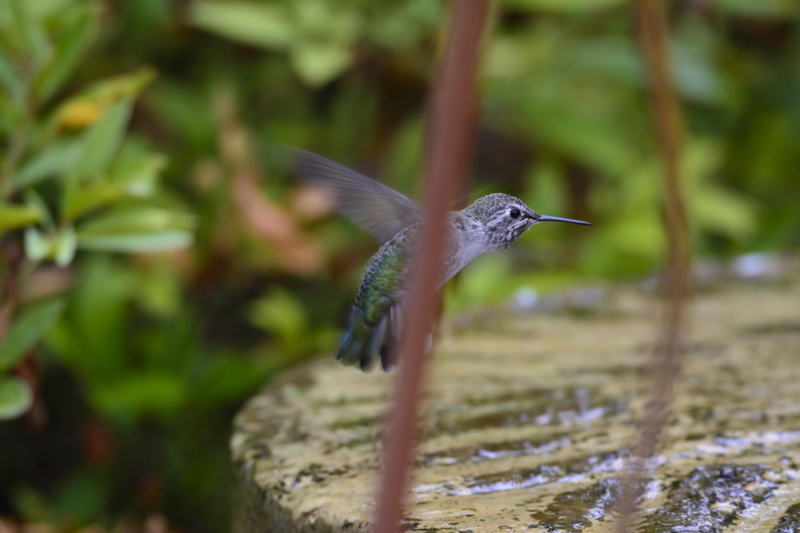 Backyard birds-5837