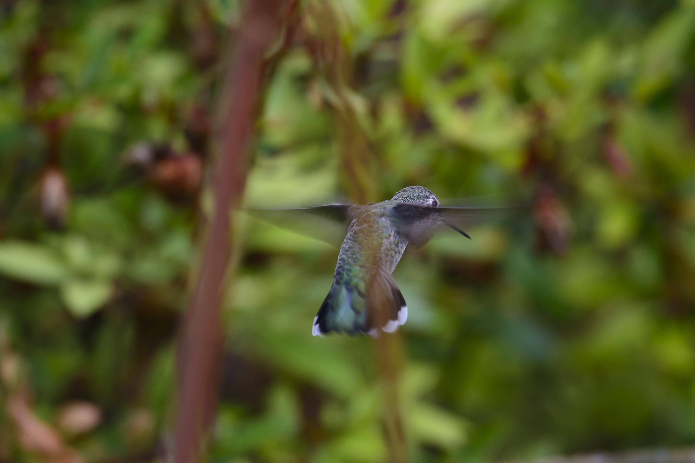 Backyard birds-5852
