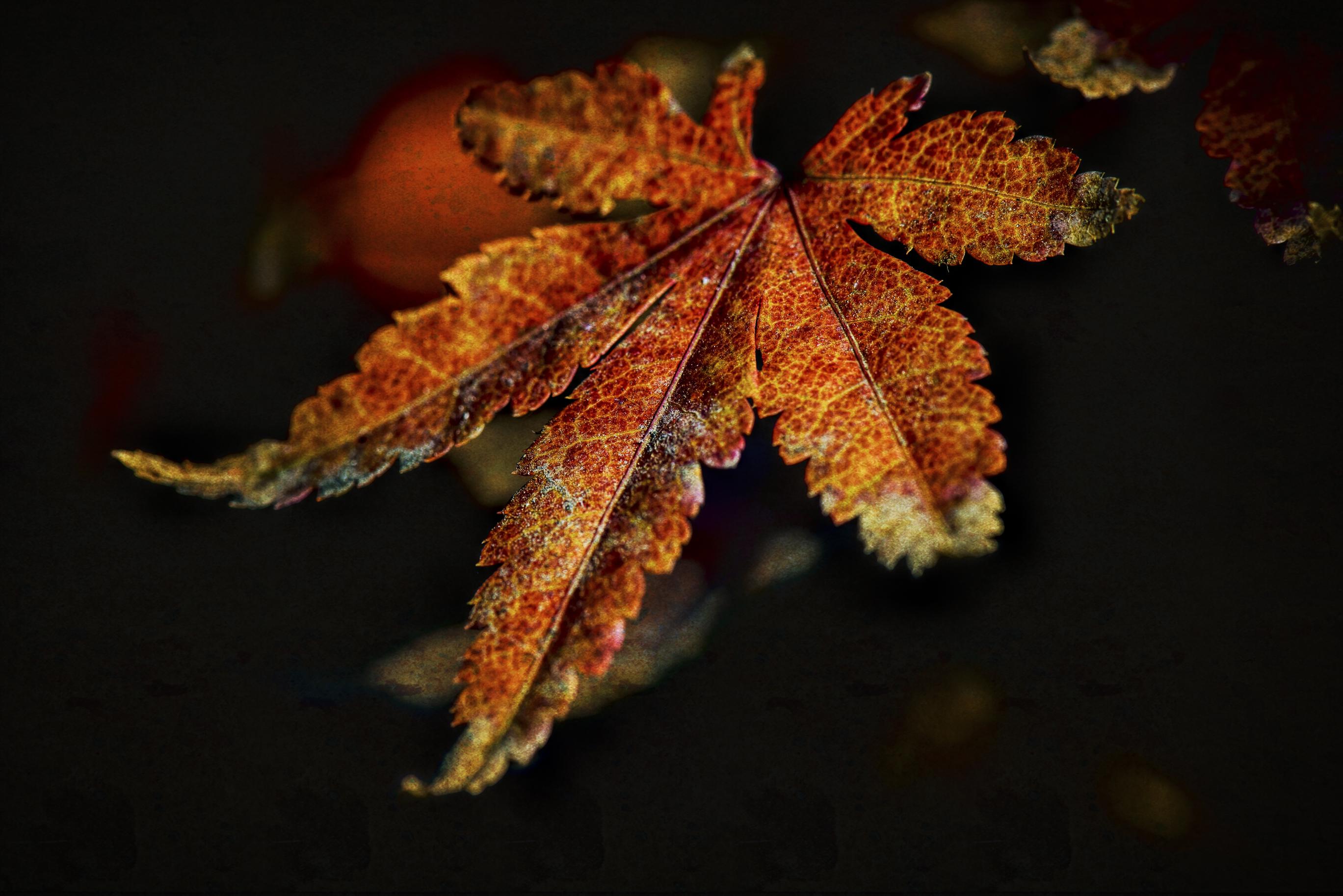 maple leaves-0616-Edit