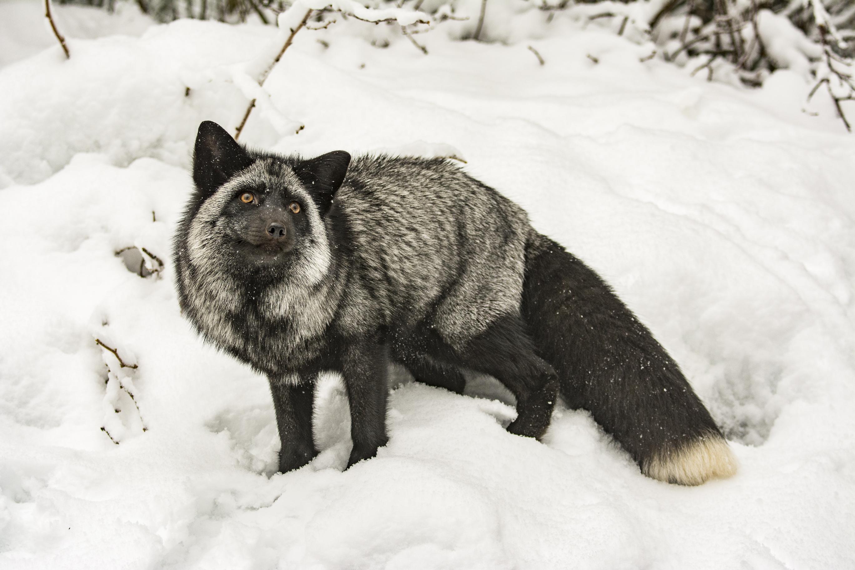 Alaska 8497