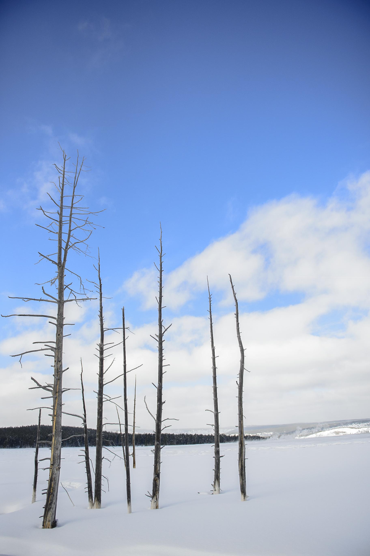 Yellowstone Day 1-4704