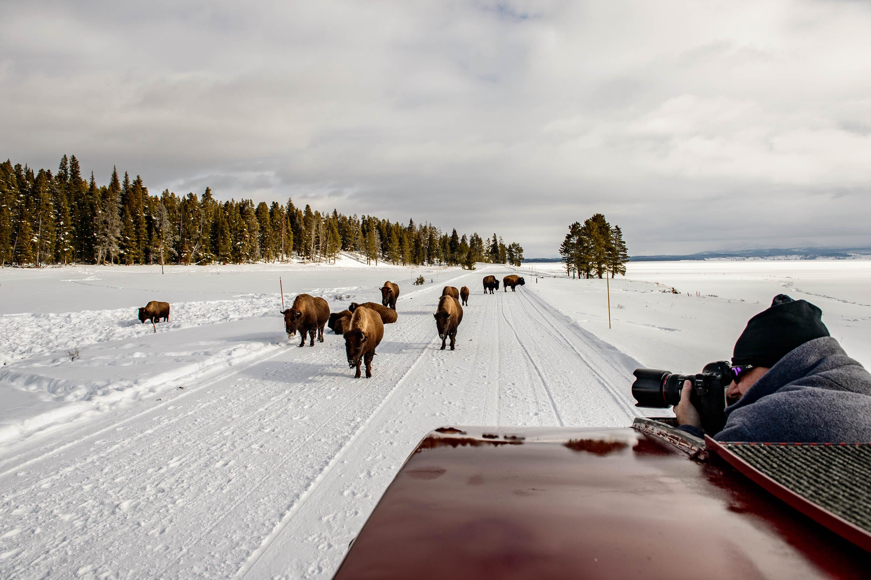 Yellowstone Day 2-6016