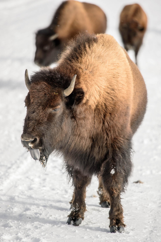 Yellowstone Day 2-6061