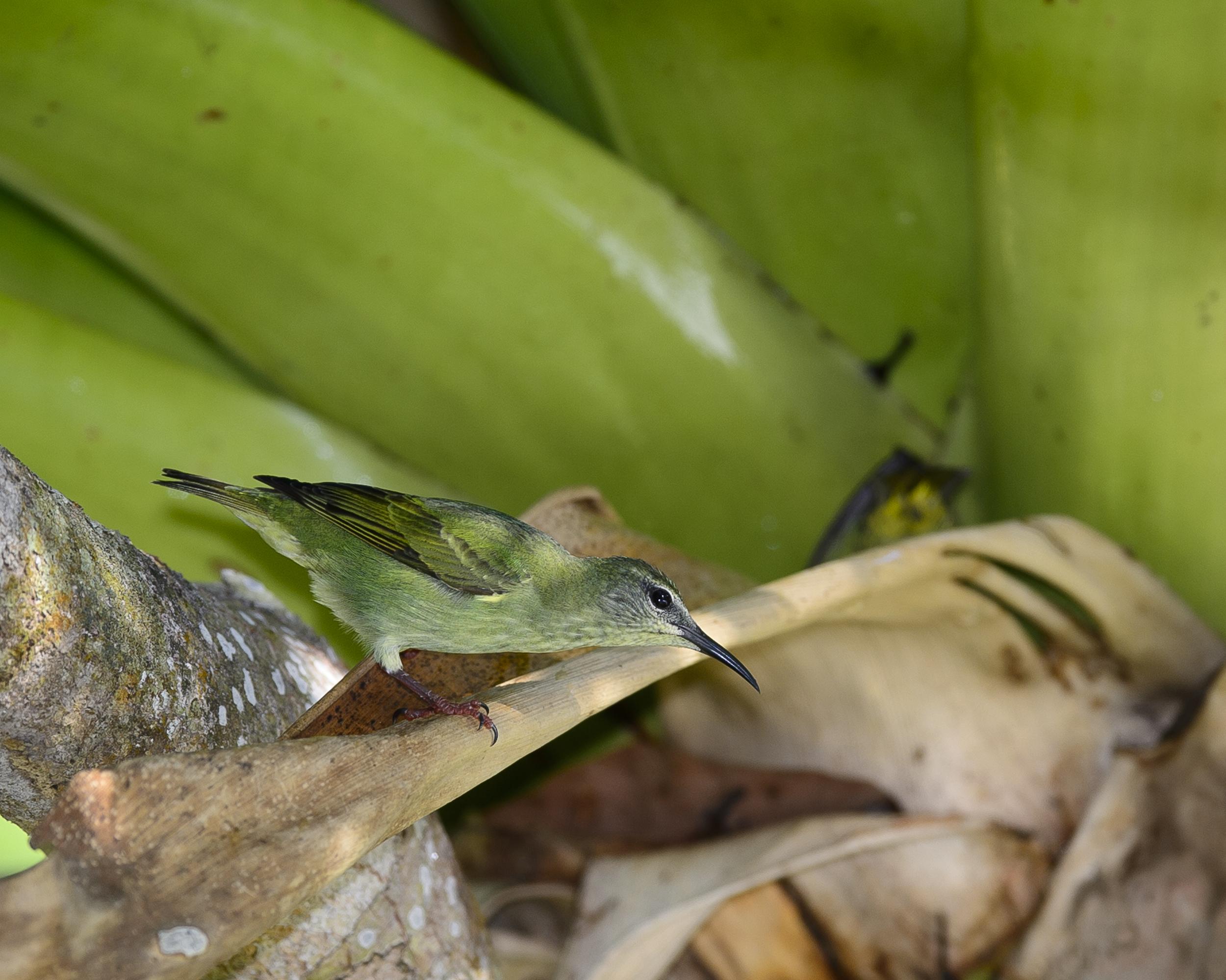 Costa Rica Day 3-2102