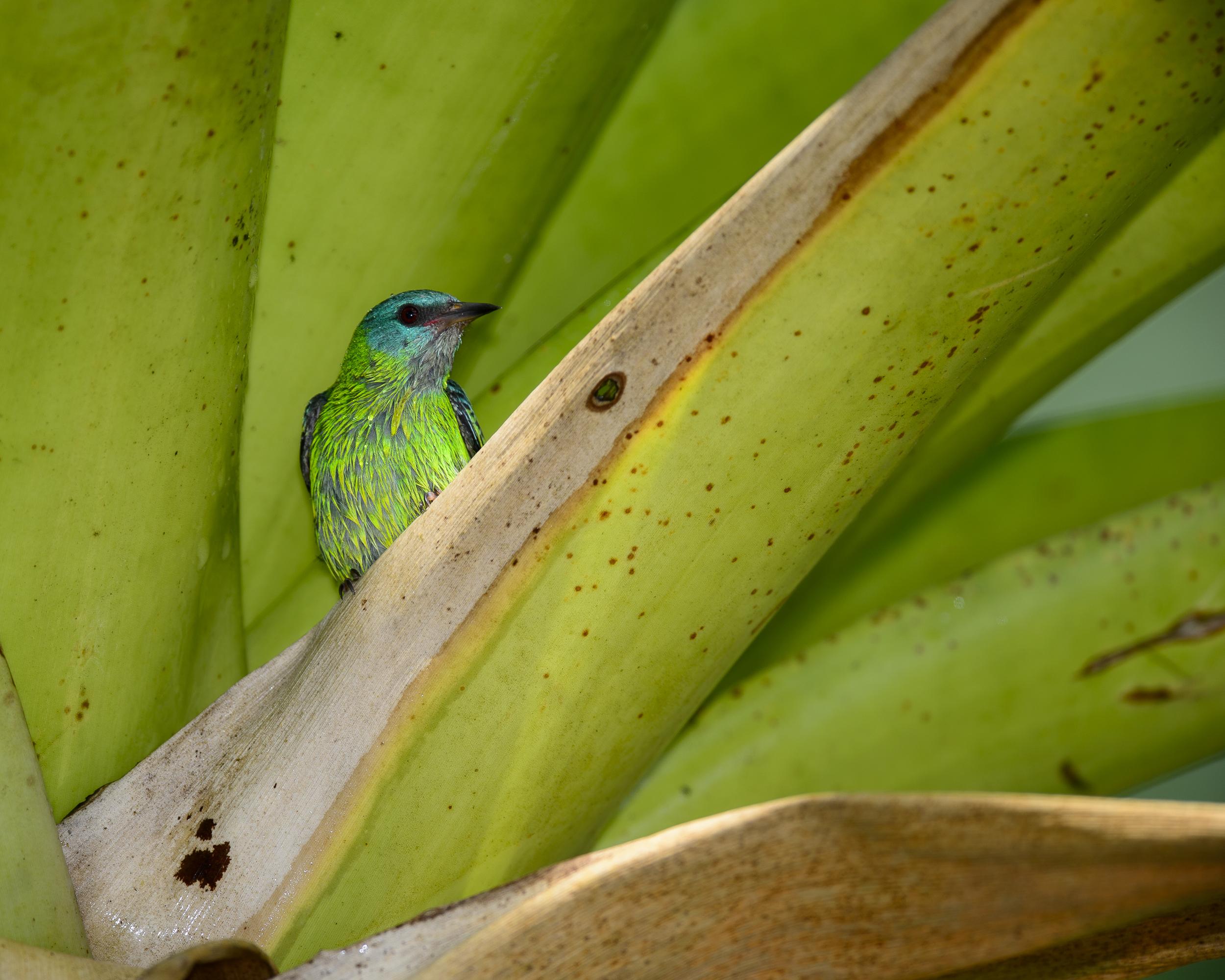 Costa Rica Day 2-0761.jpg