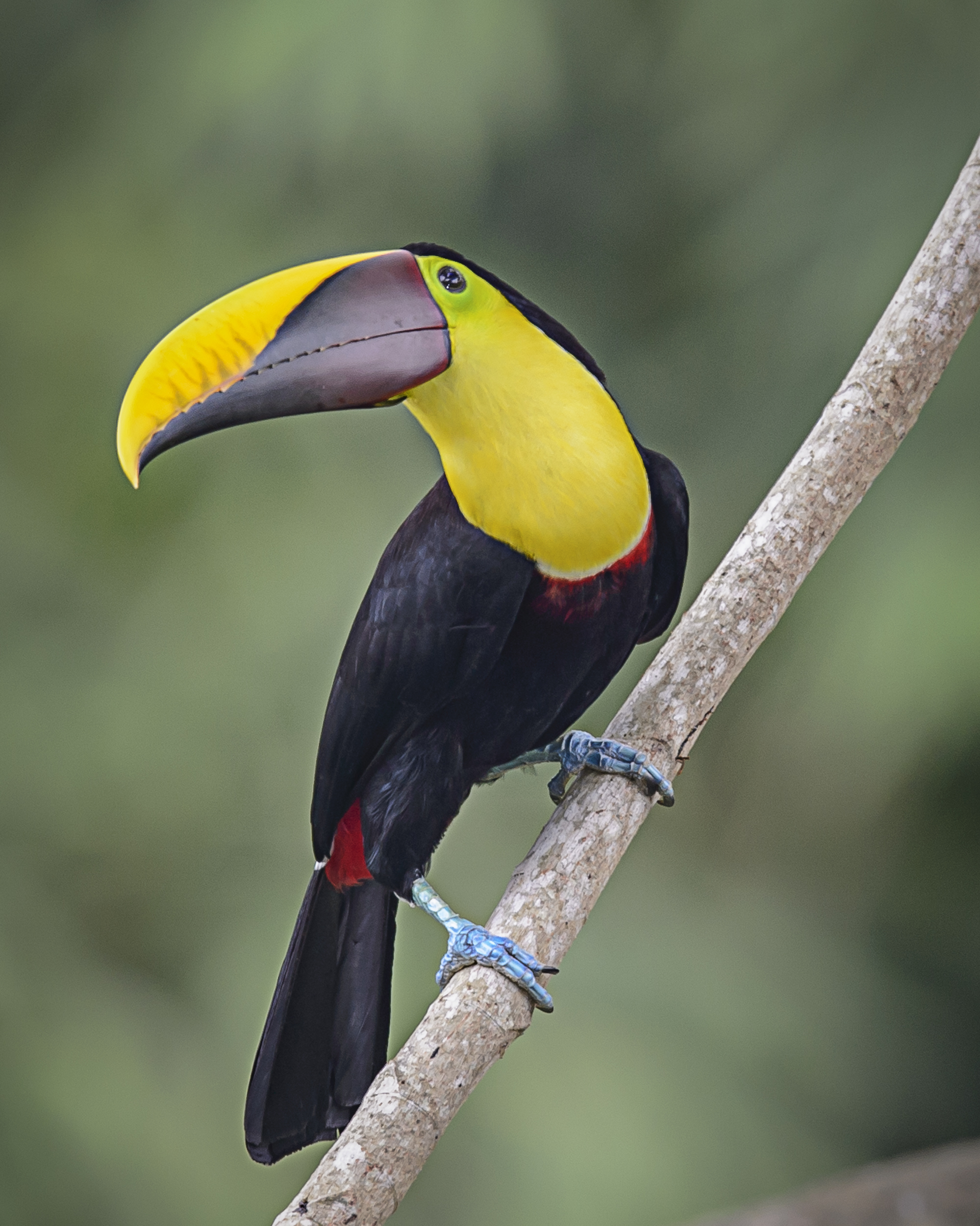 Costa Rica Day 5-3542-Edit