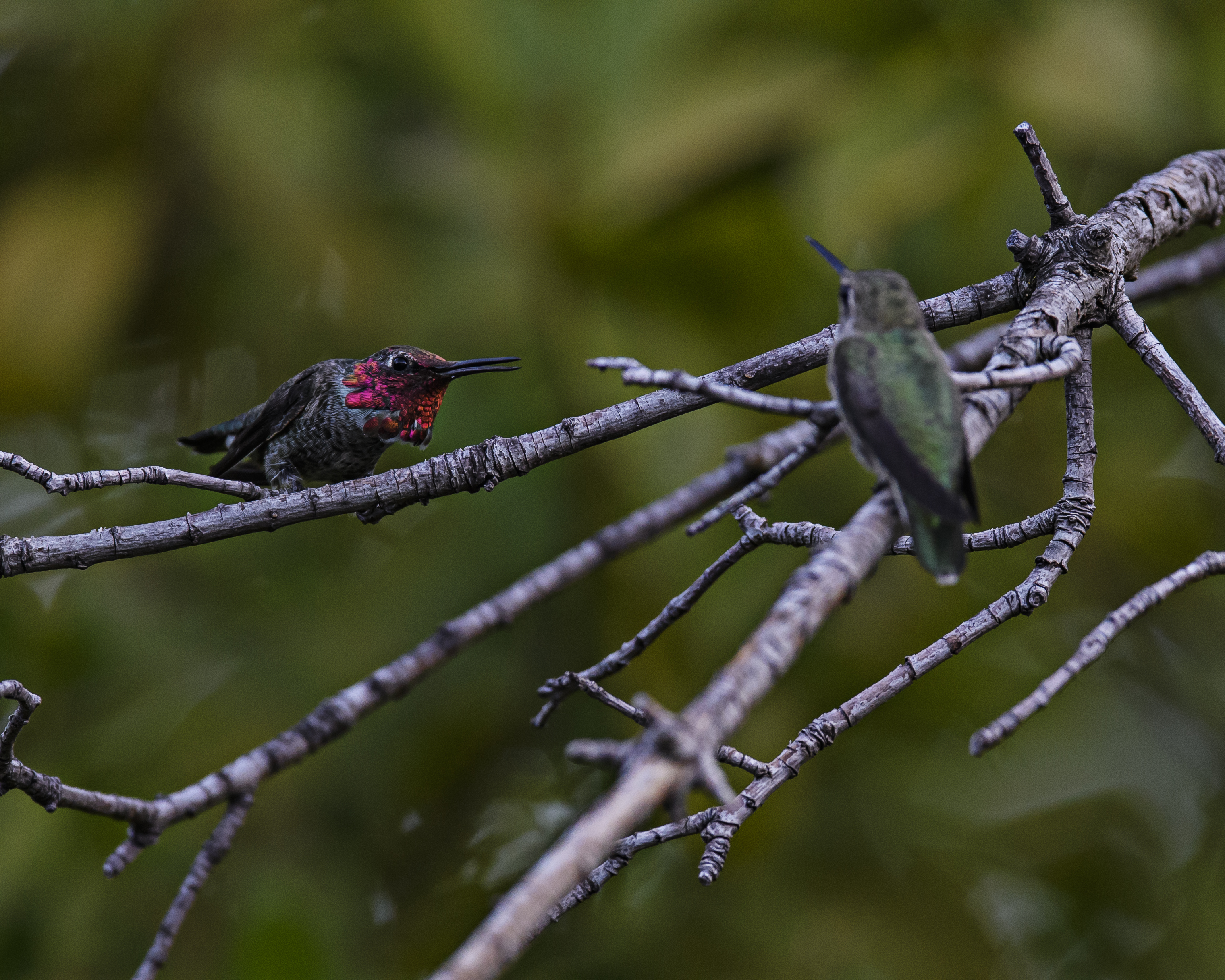 2 HUMMERS 1