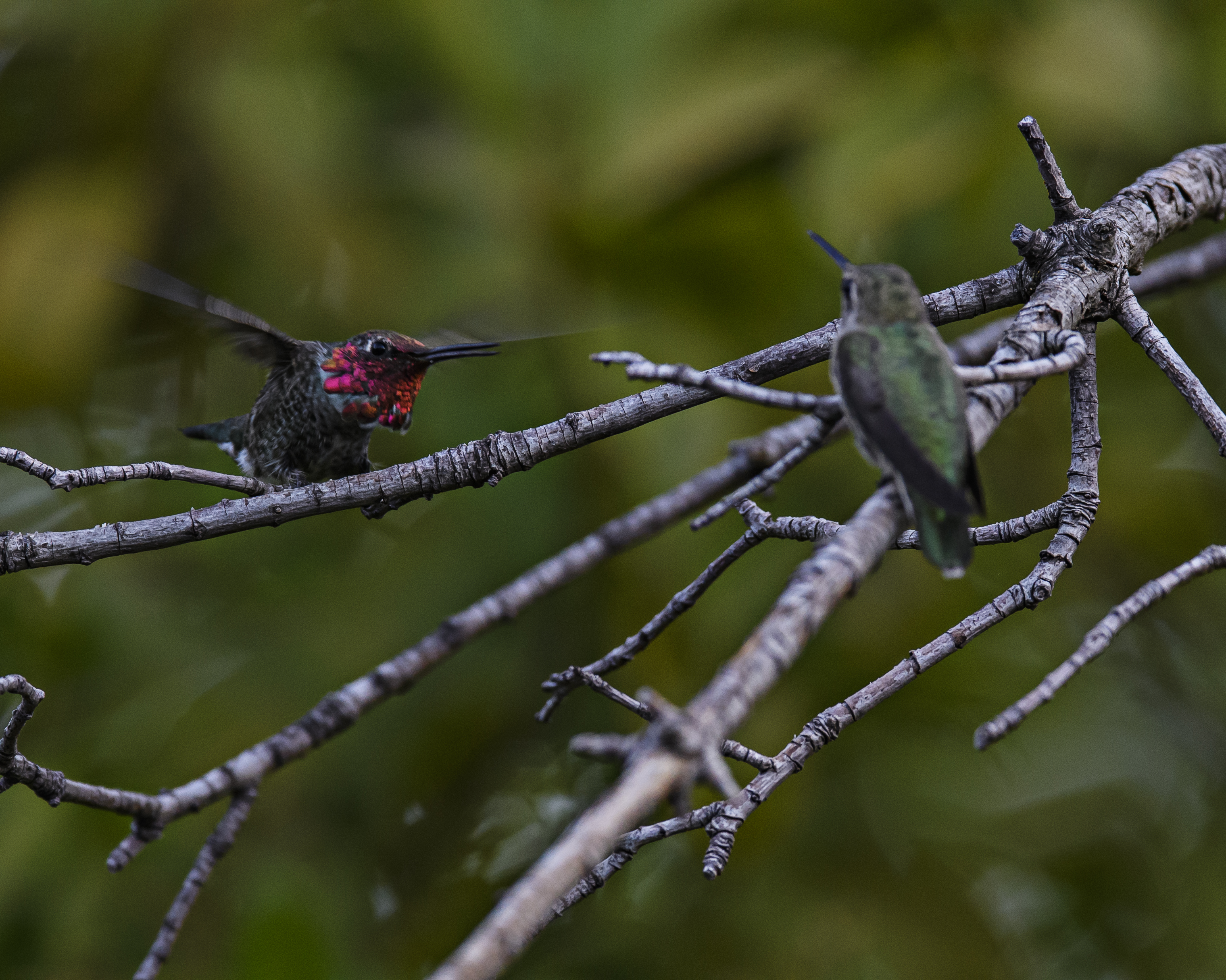 2 hummers 2