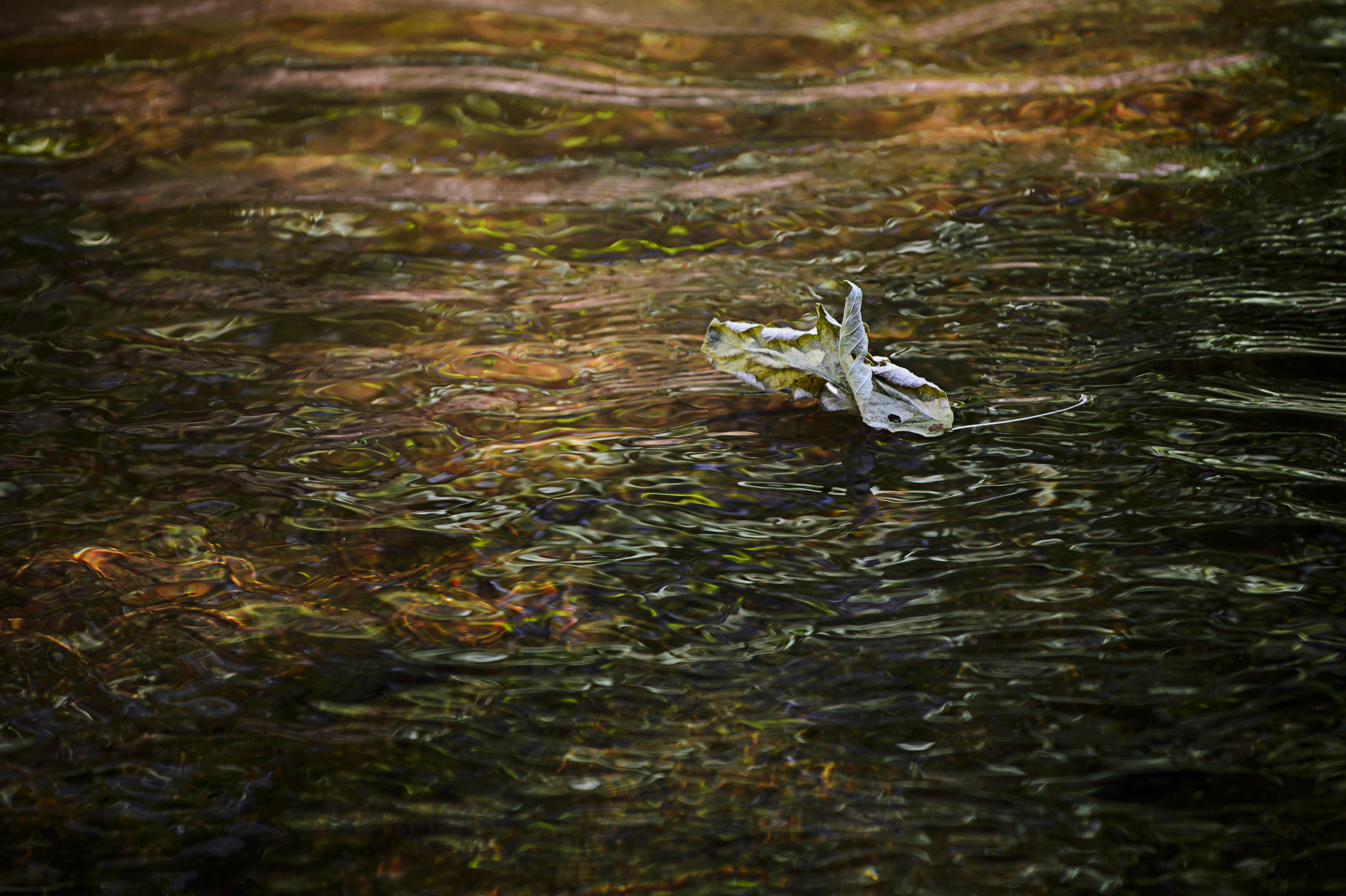 Floating Leaf.jpg