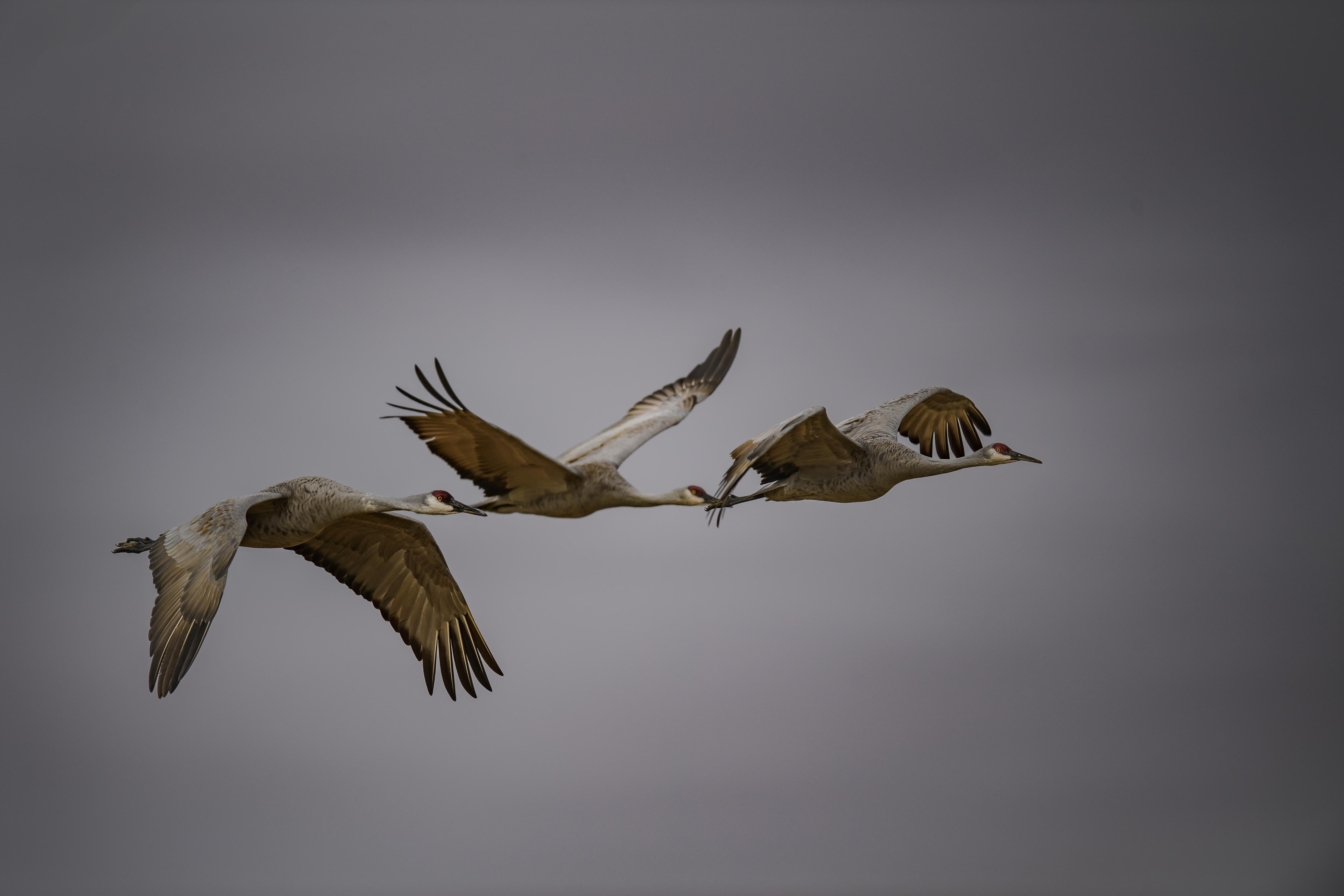 Crane Trio 2.jpg