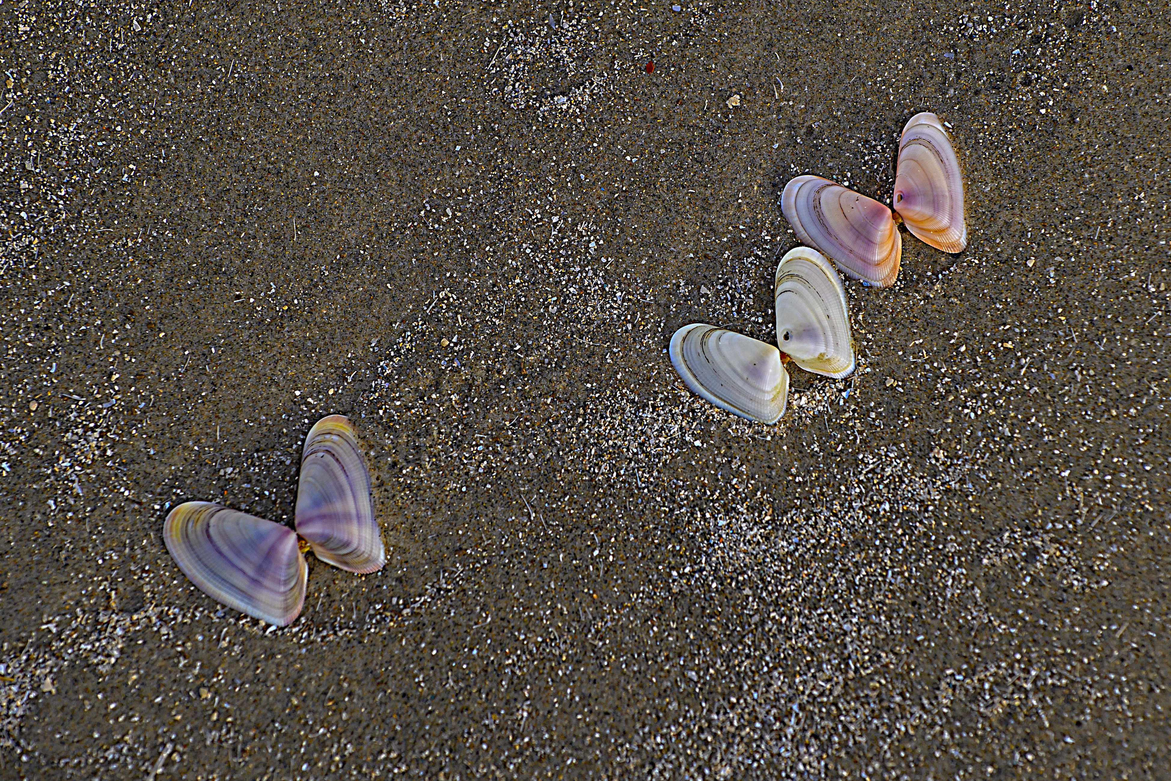 Butterflies in the sand.jpg
