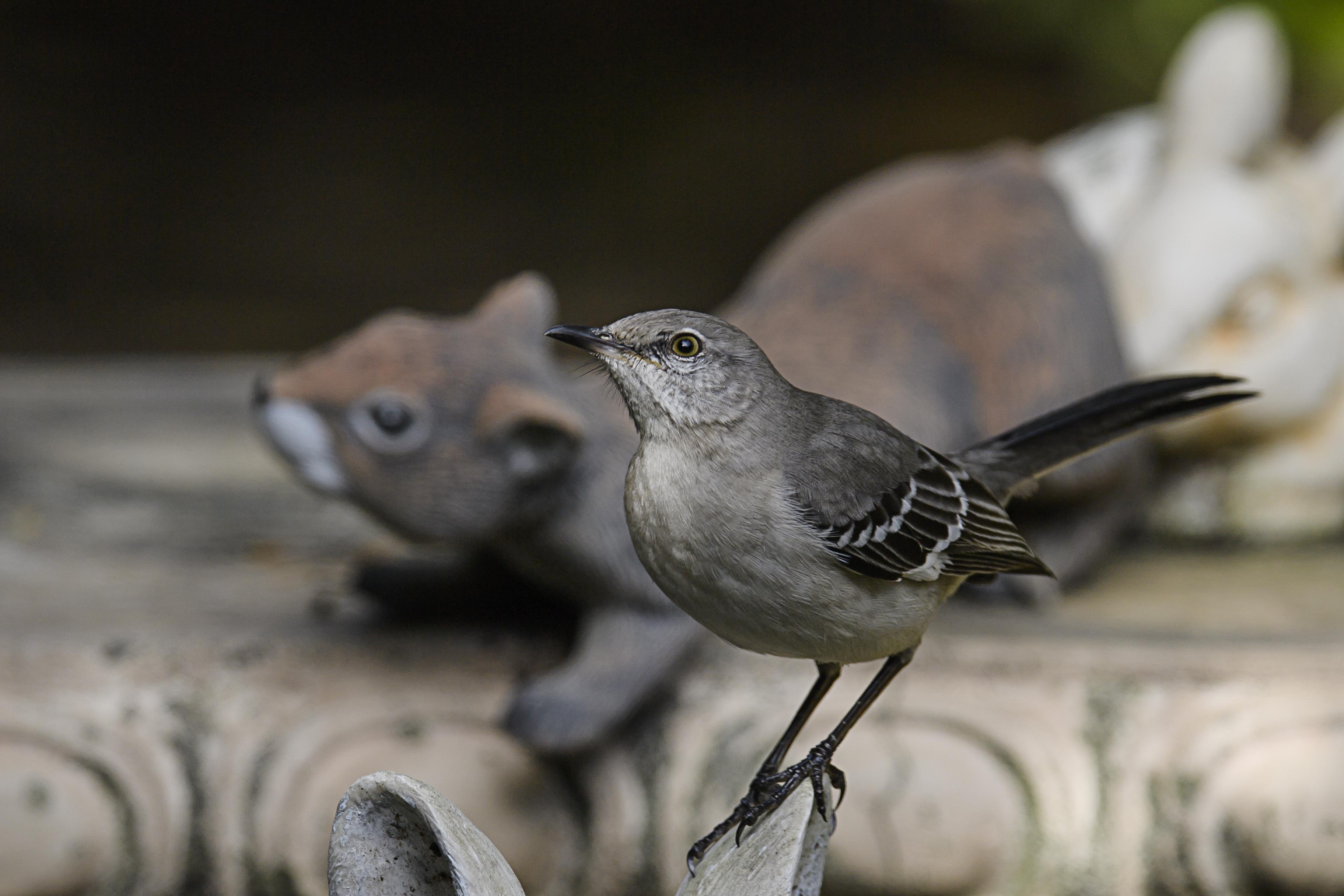 mockingbird and squirrel.jpg