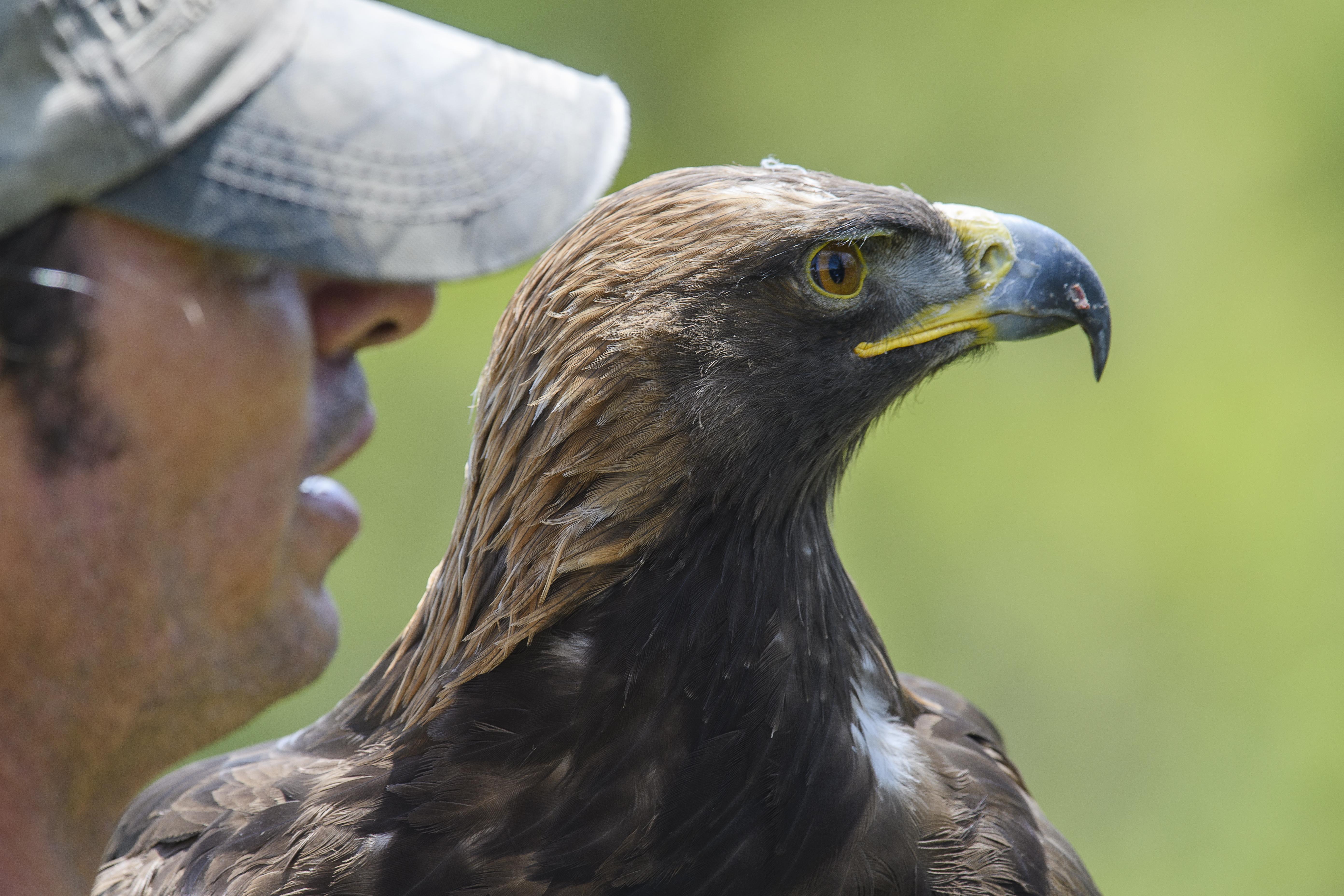 Eagle and Tony