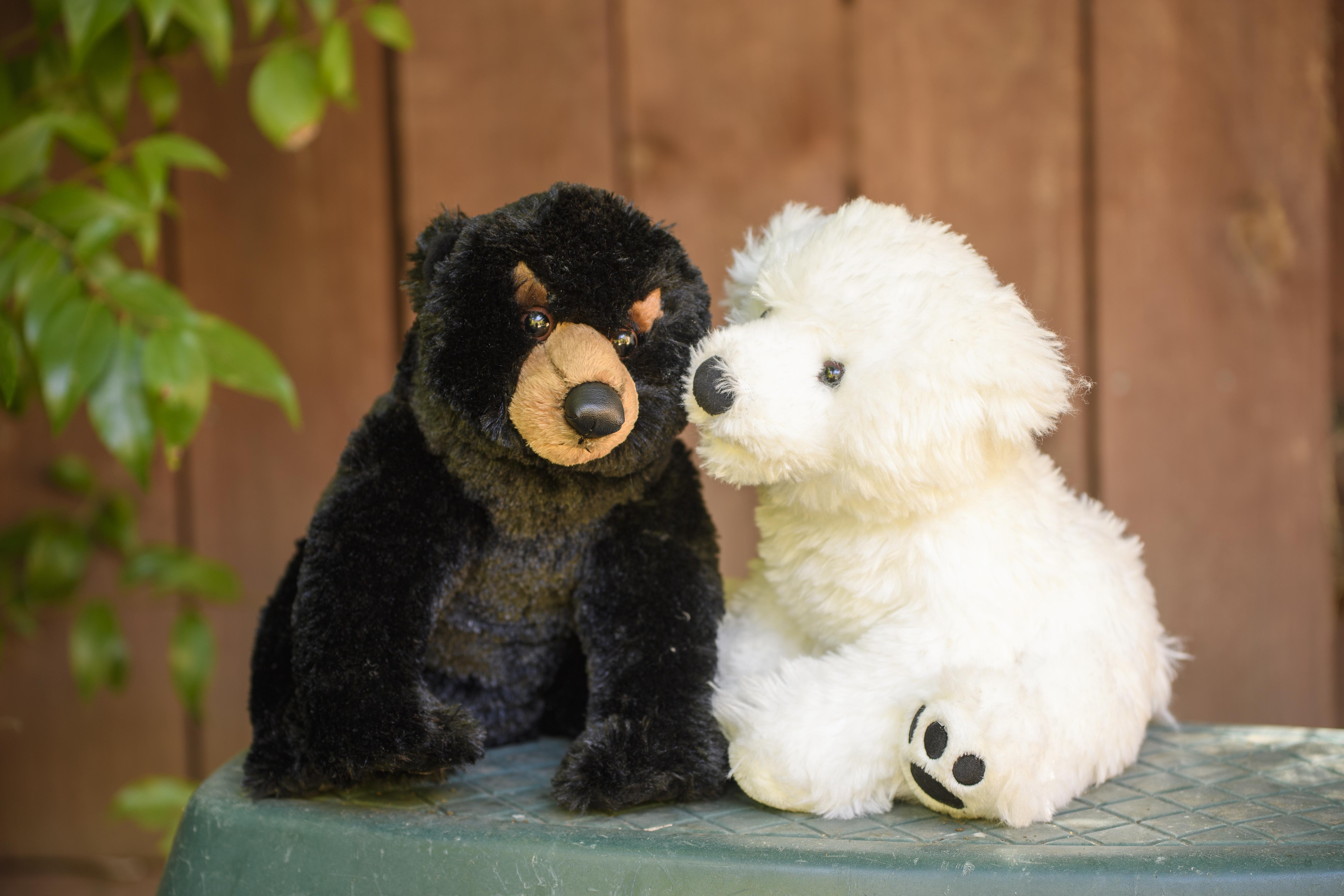 black bear white bear 1.jpg
