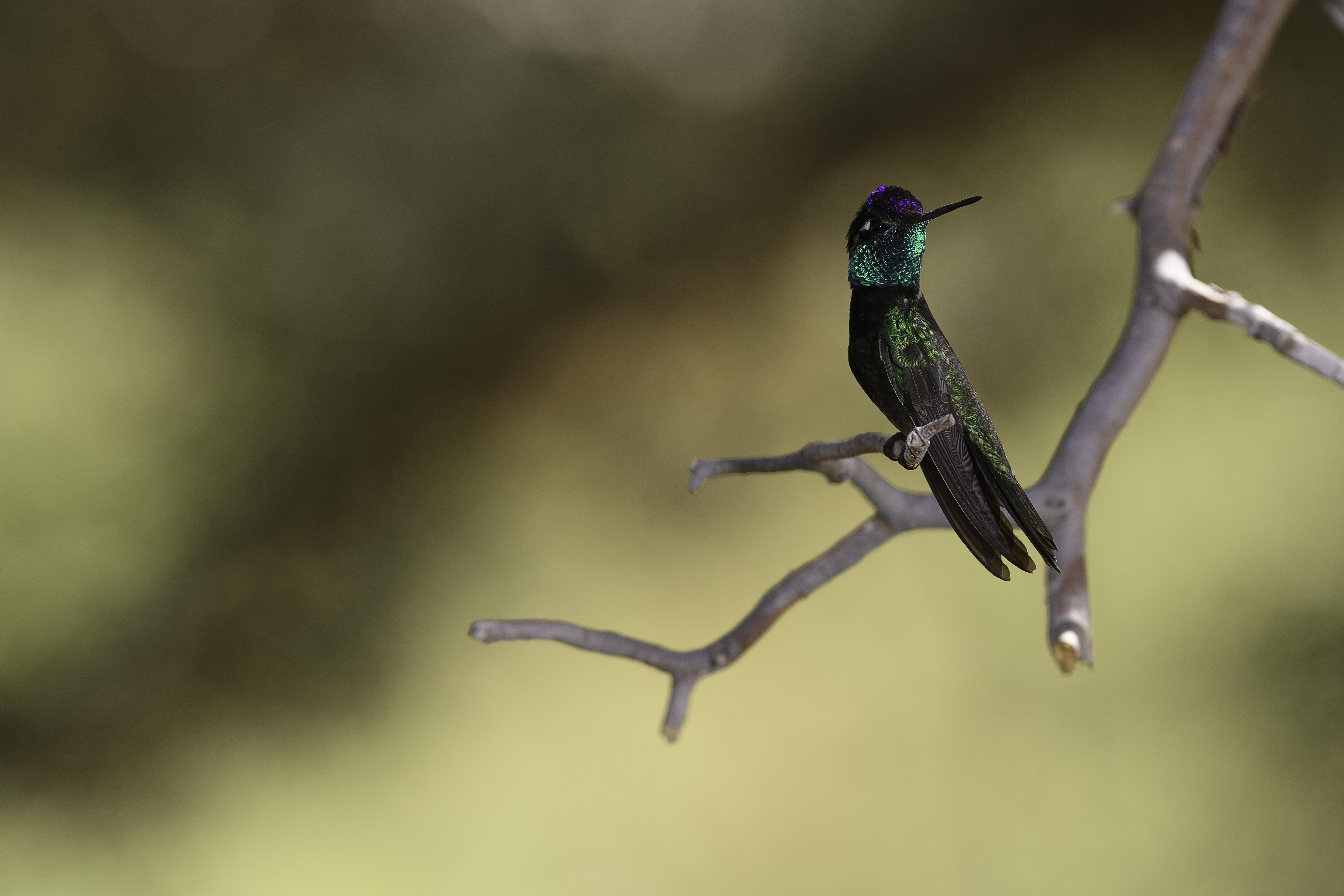 Mr. Wonderful perched