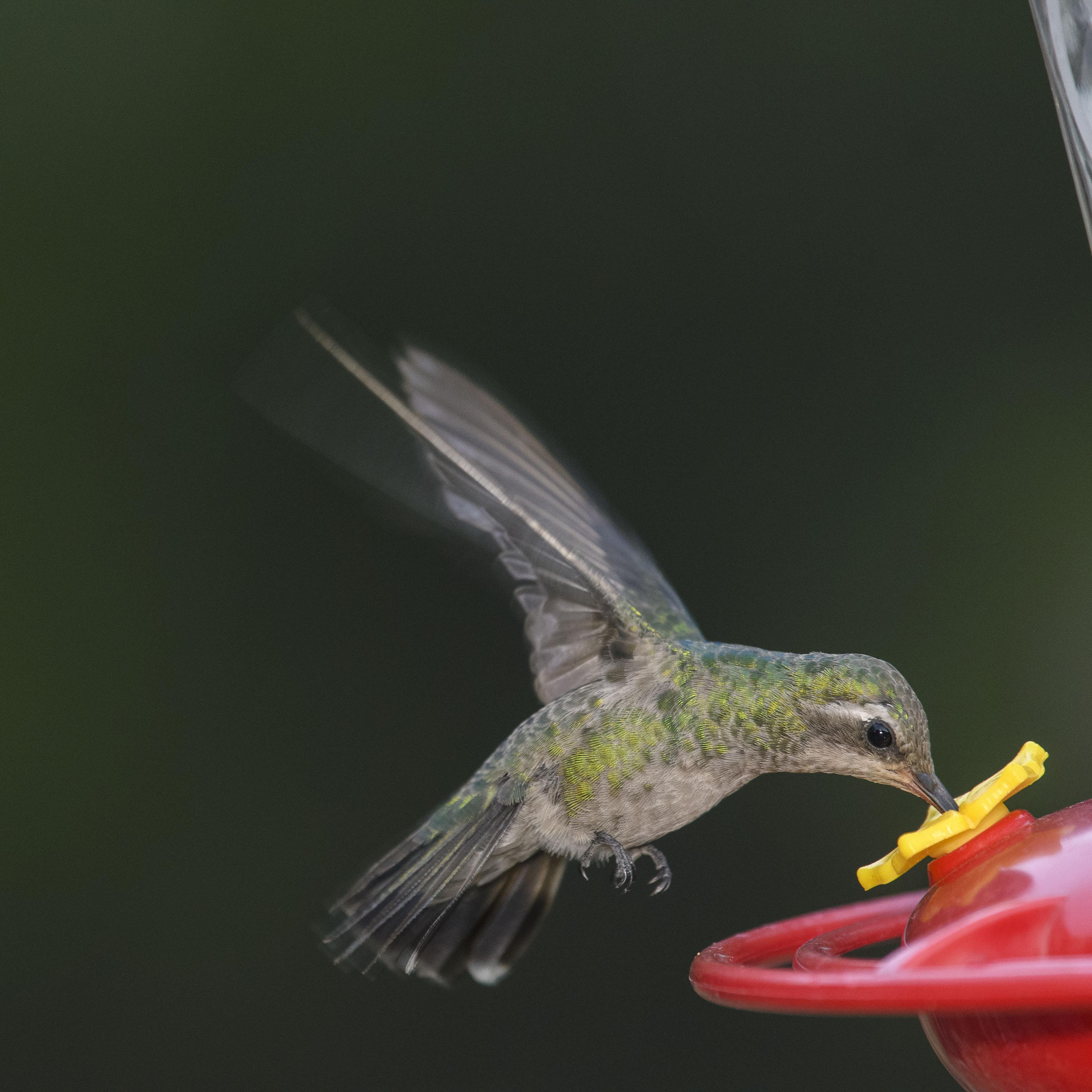 female to feeder 4