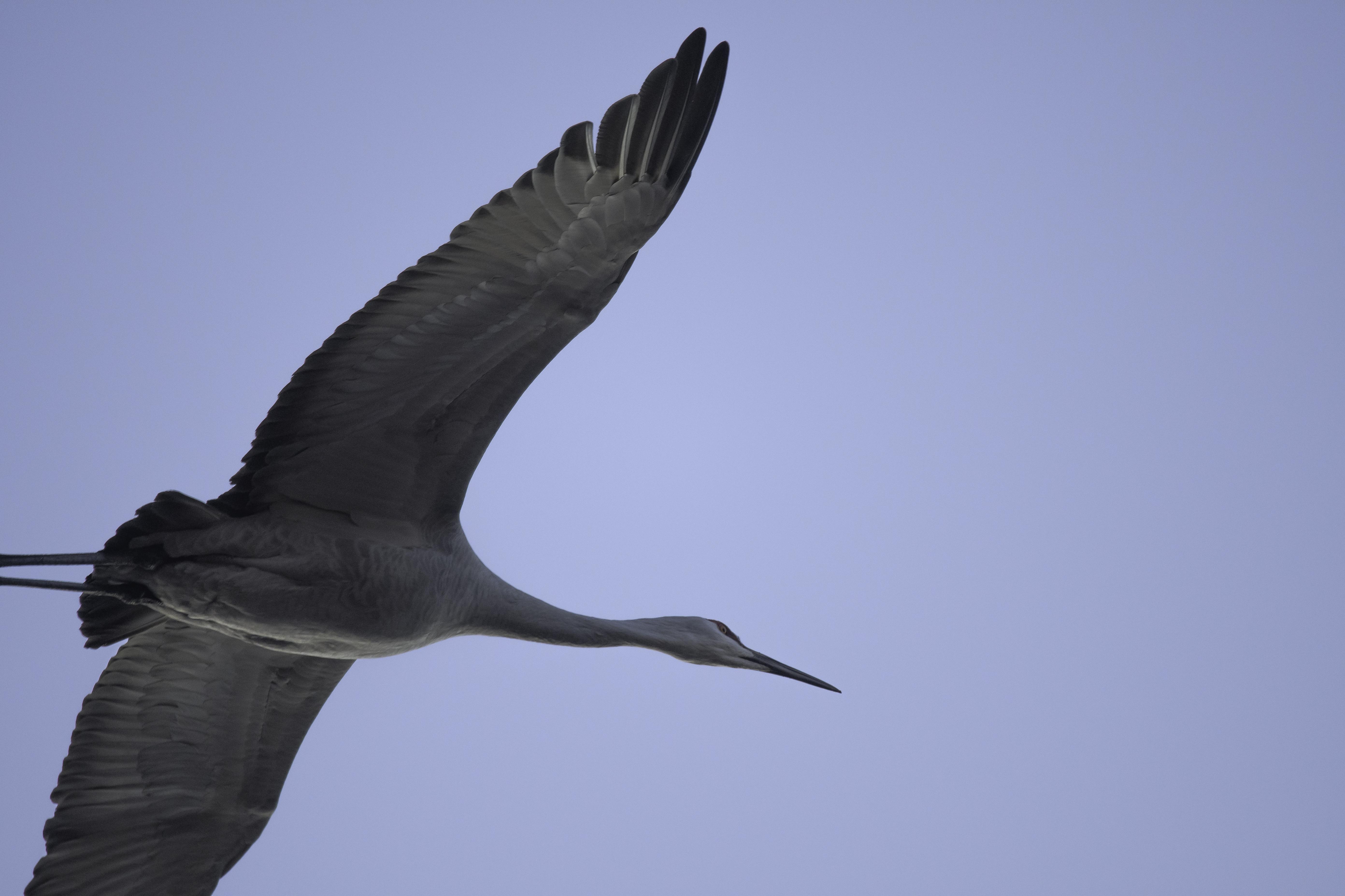 Crane looking up at.jpg