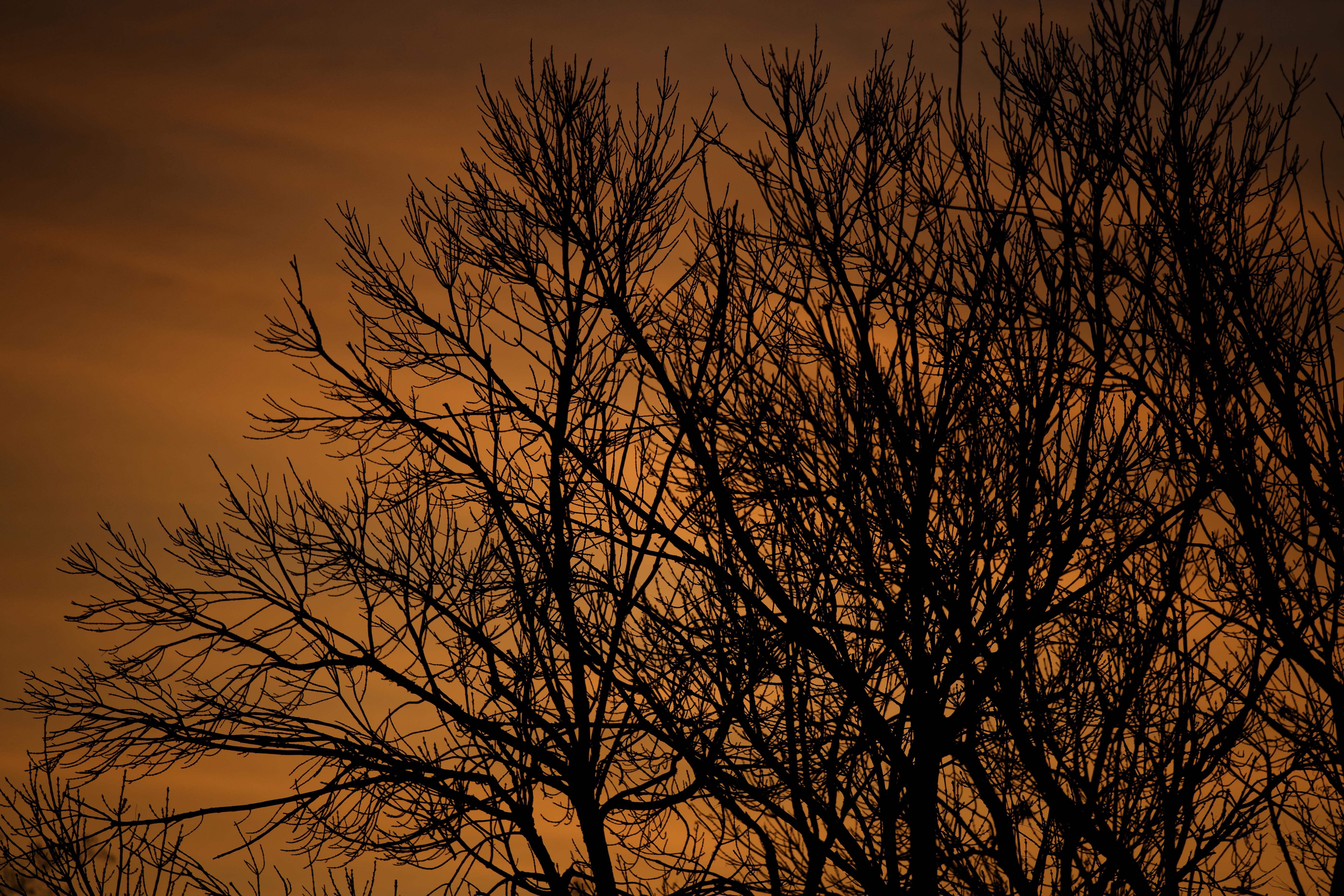 Morning Color.jpg
