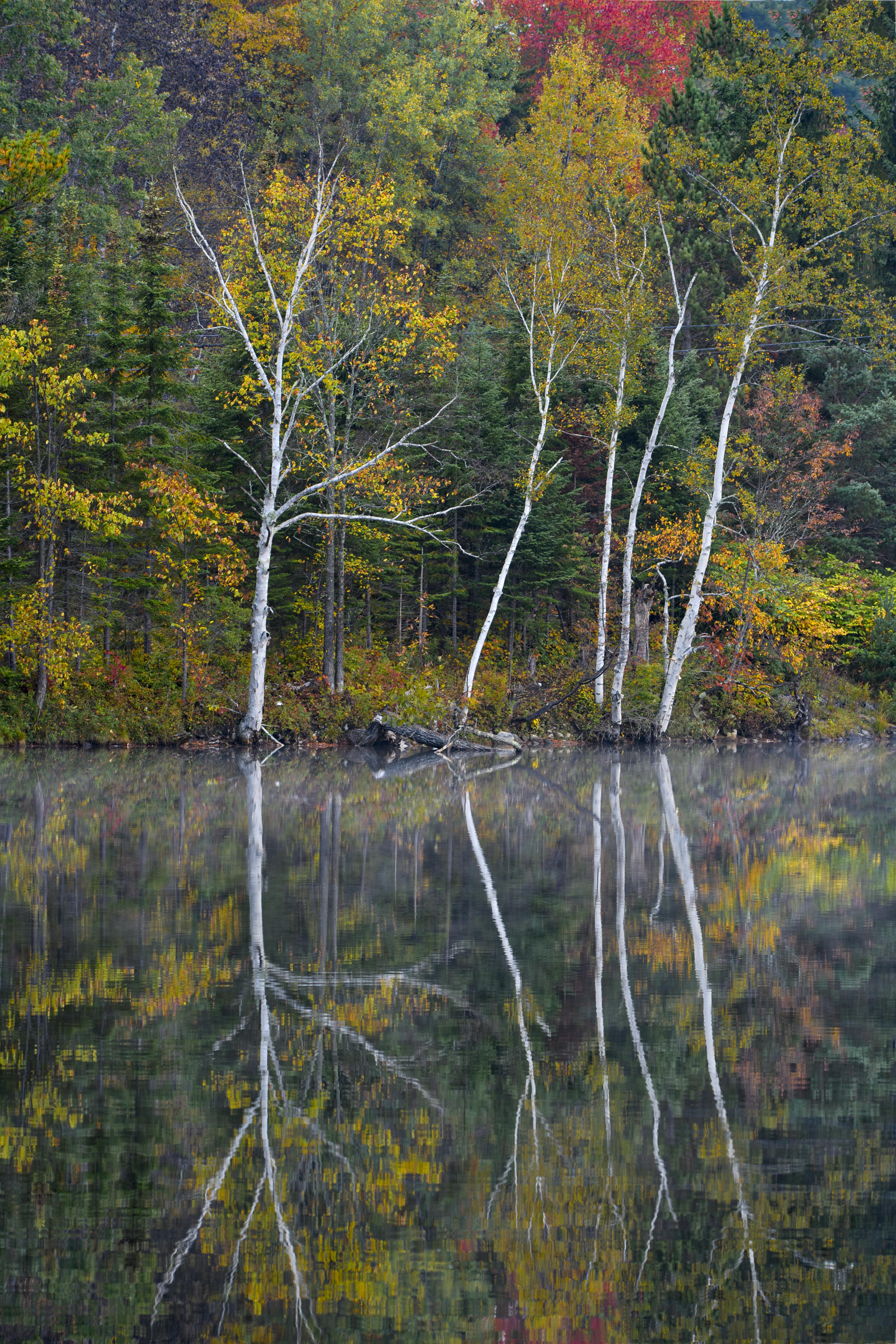 reflecting aspen.jpg