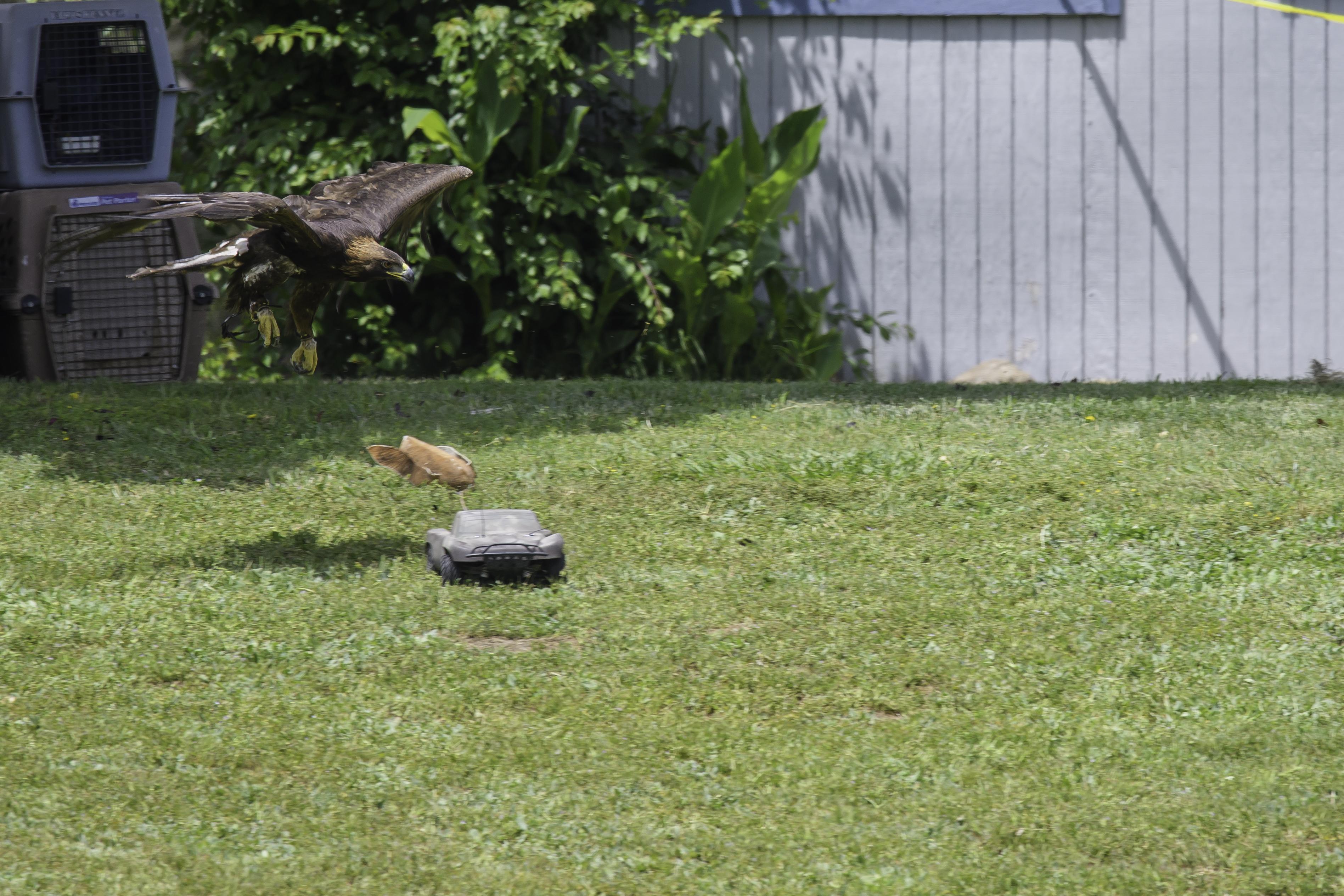 Golden Eagle car chase 1