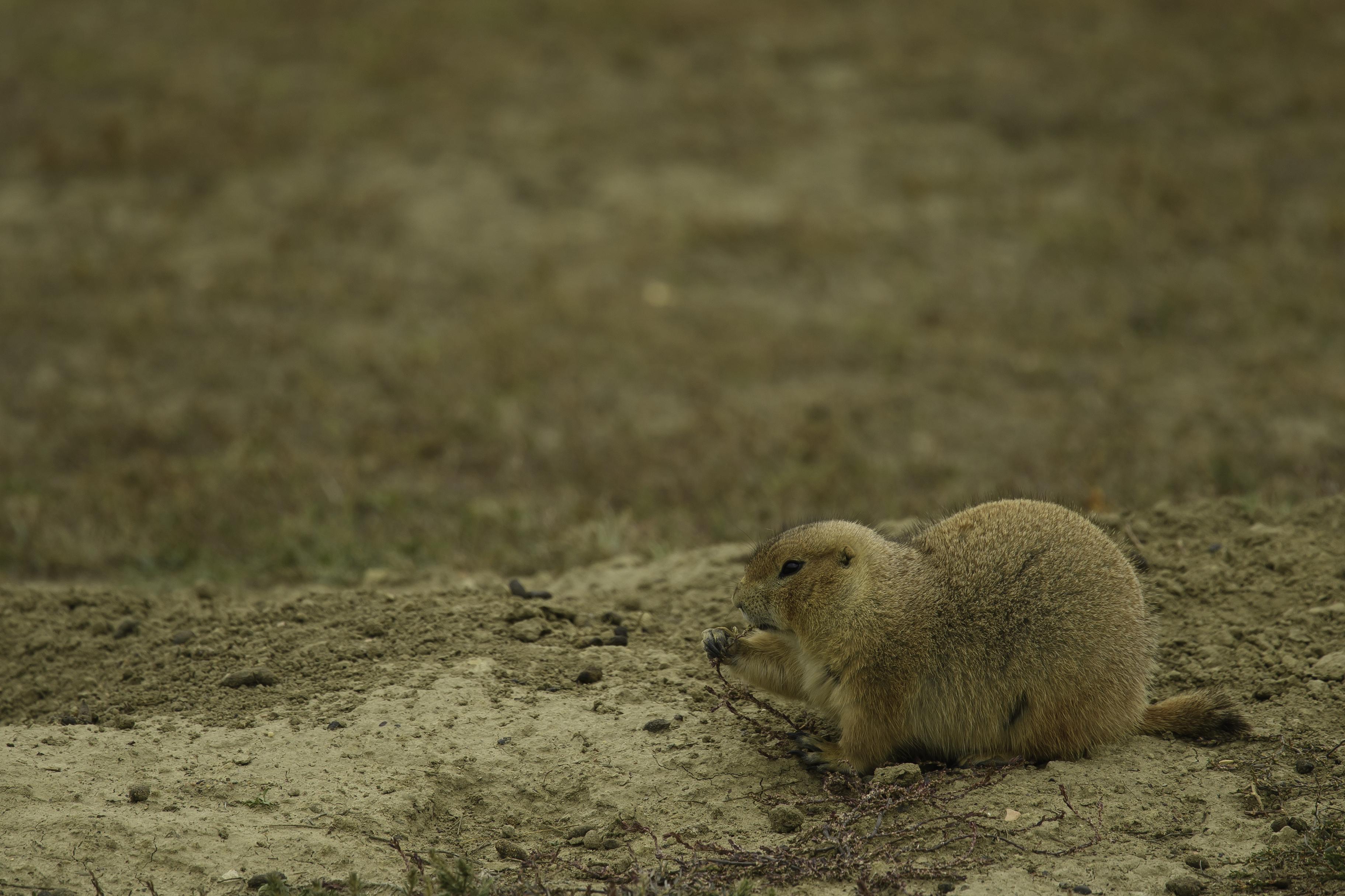 Roos. Natl Park Day 3- 2485-1.jpg
