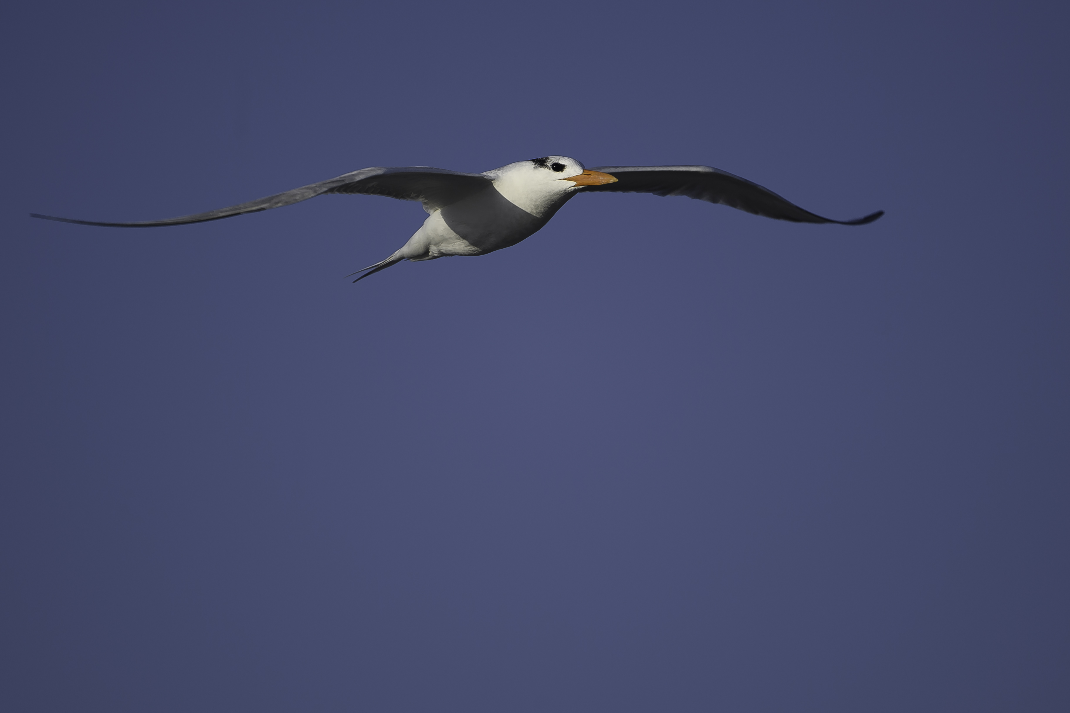 Florida Birds Day 3 01853-1.jpg