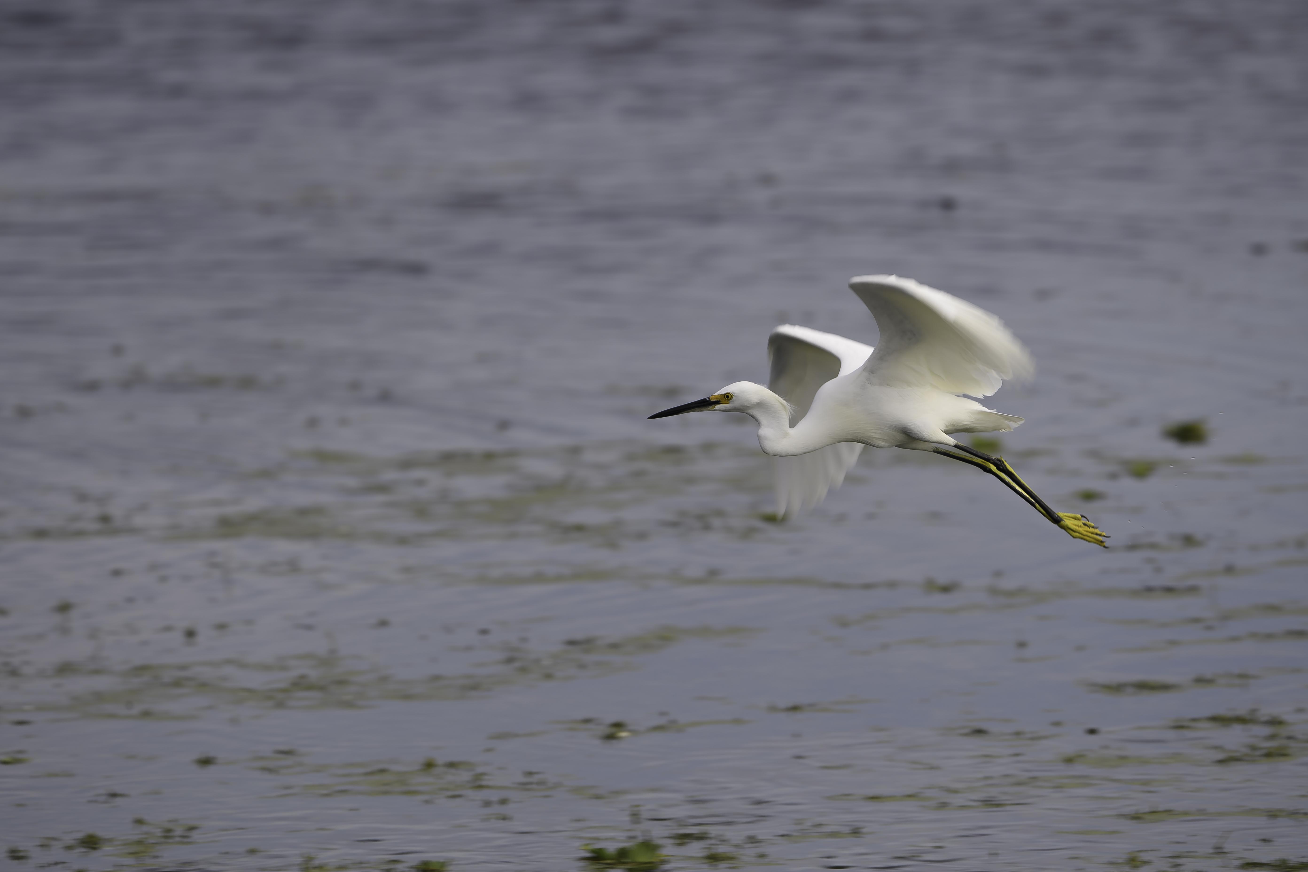 Florida Birds Day 4 01148-1.jpg