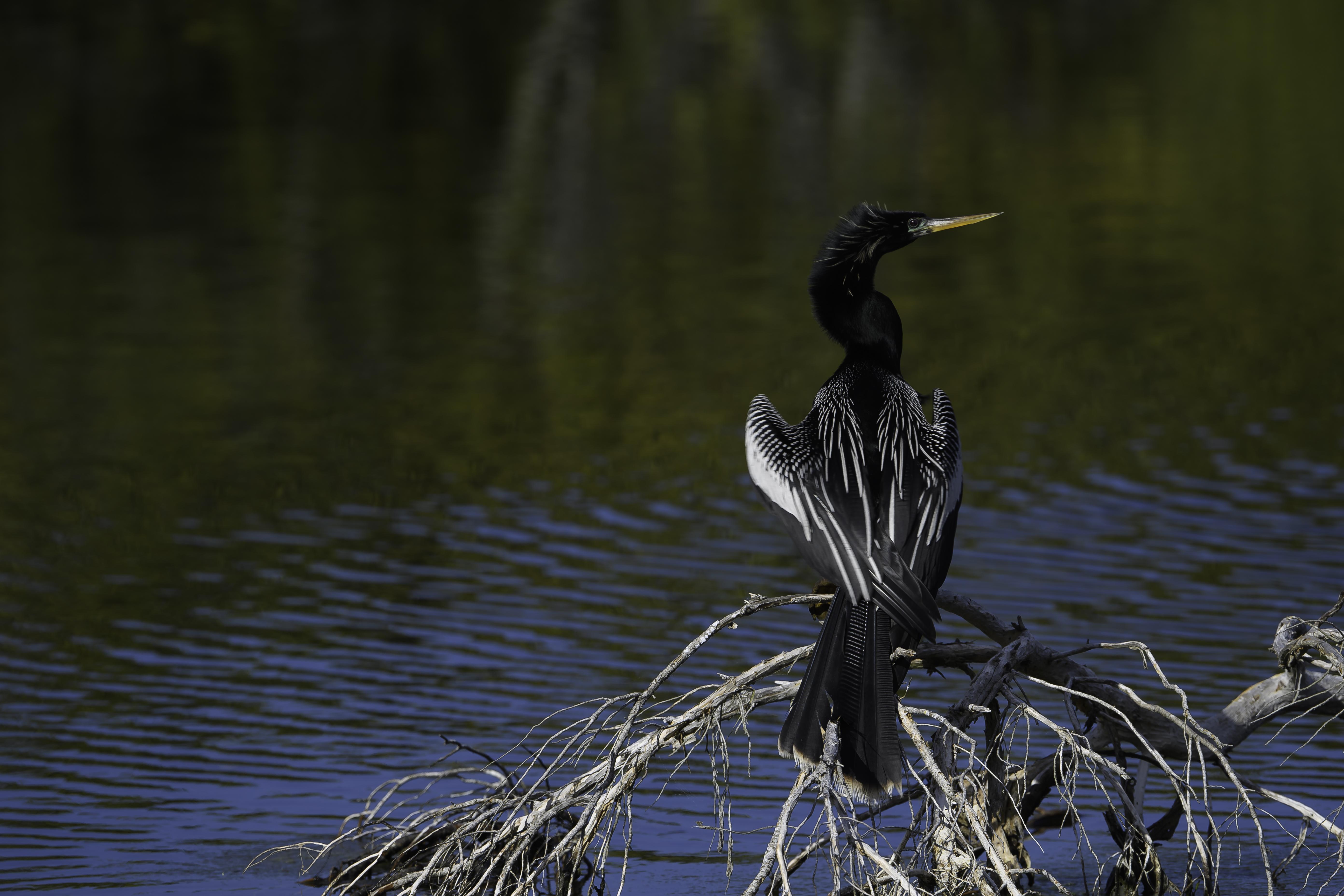 Florida Birds Day 2 01337-1.jpg