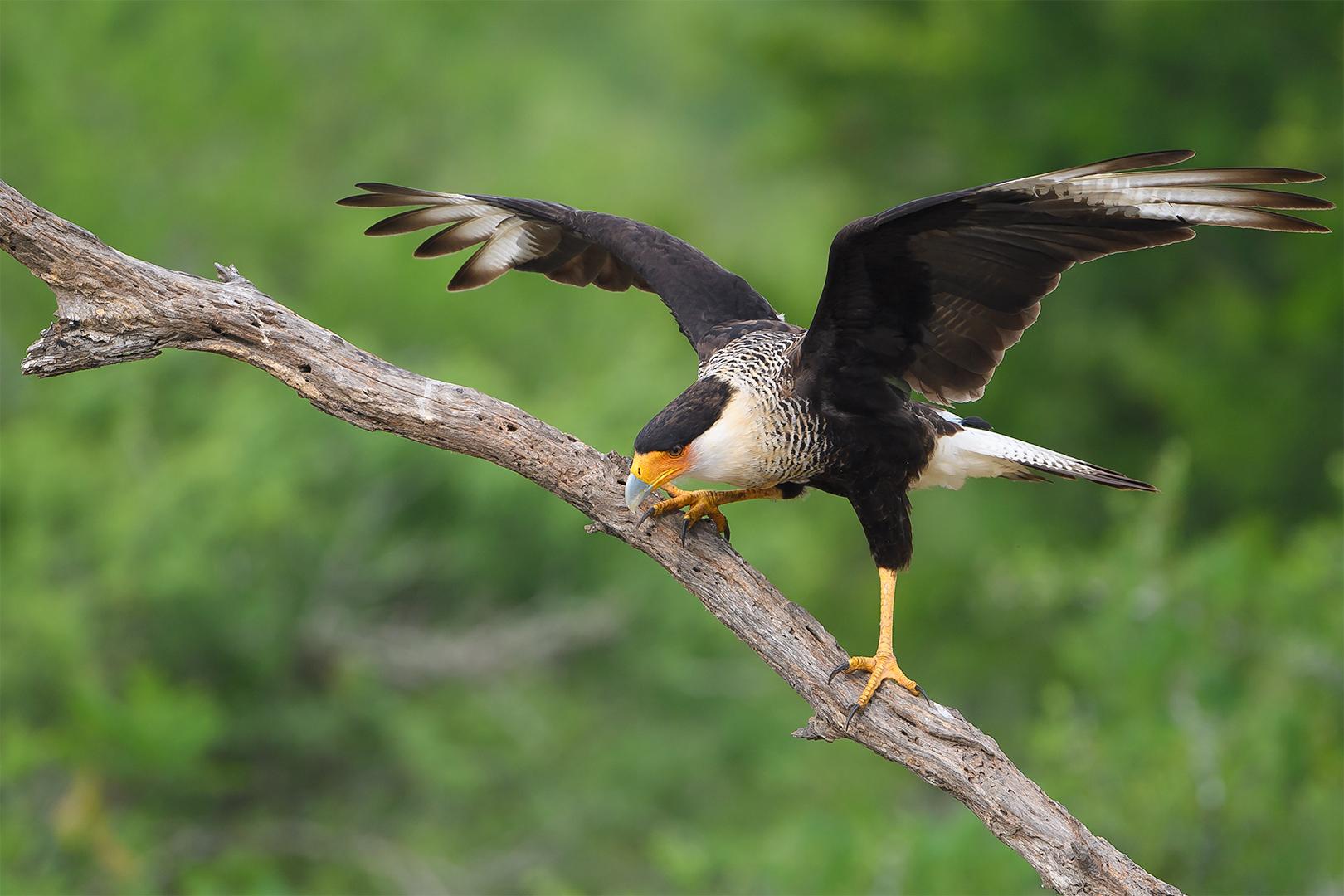 Texas Birds 2019  Day 2 01278-1.jpg