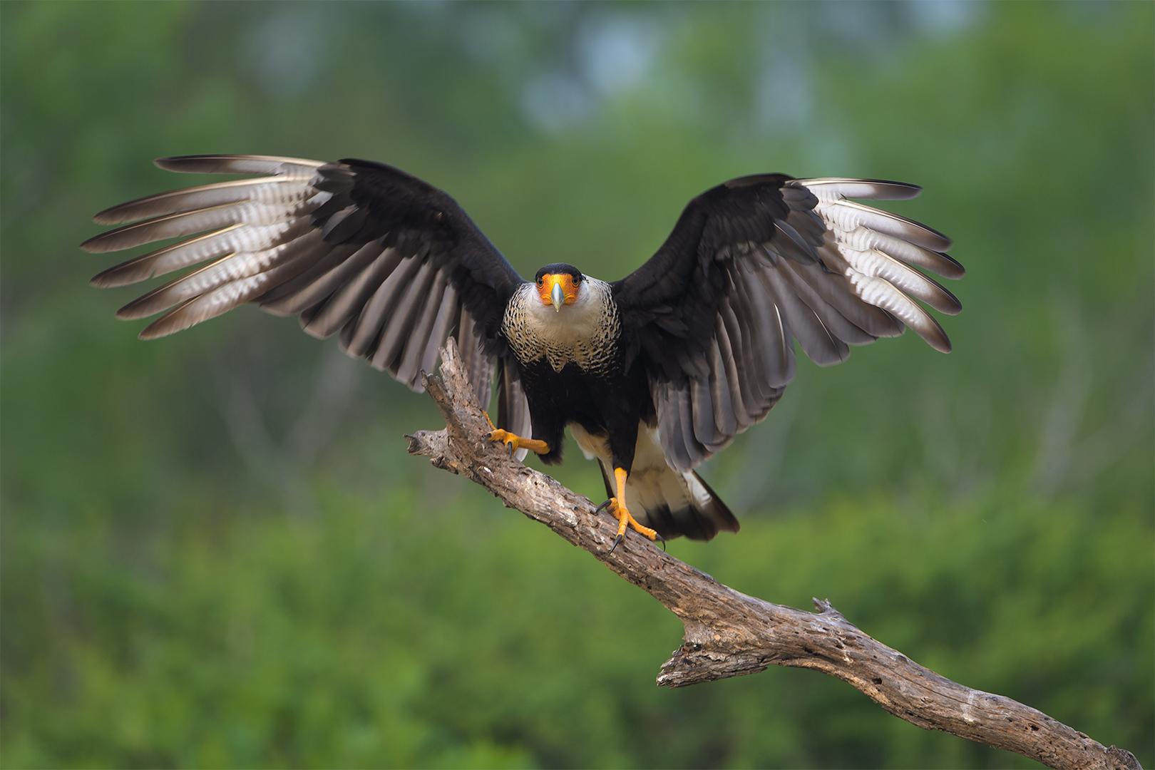 Texas Birds 2019  Day 4  00630-1.jpg