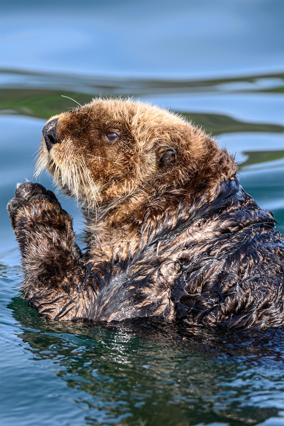 ak-2020-otters-day-2-6812-1-2